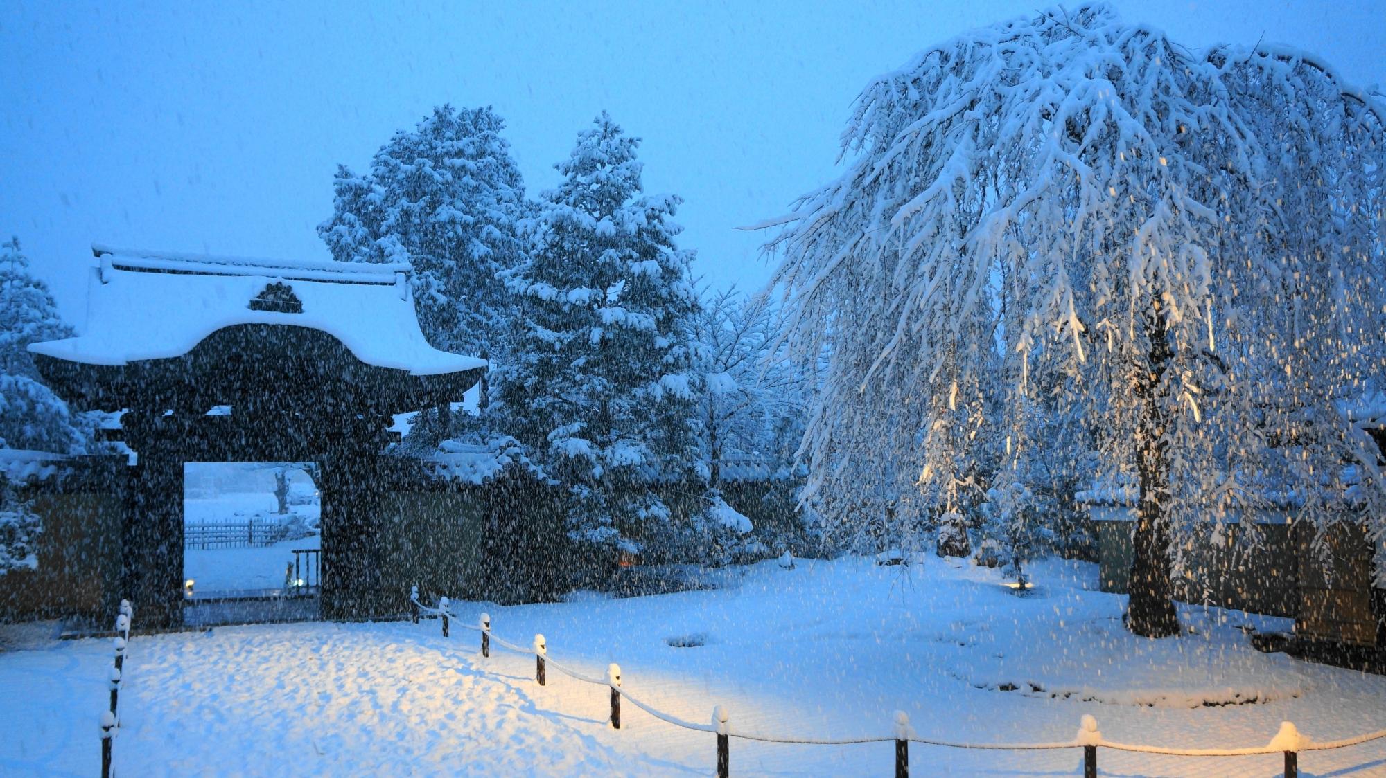 雪の唐門と豪快に雪の花が咲く一本しだれ