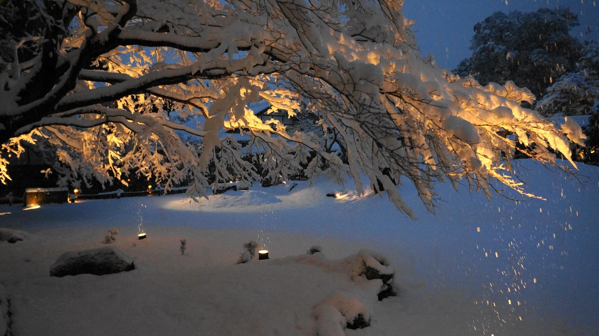 枝の先までびっしり雪が積もったもみじの木