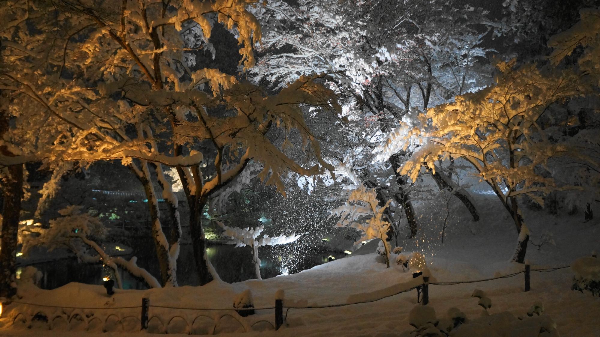 赤や白のライトに照らされる雪の庭園と池