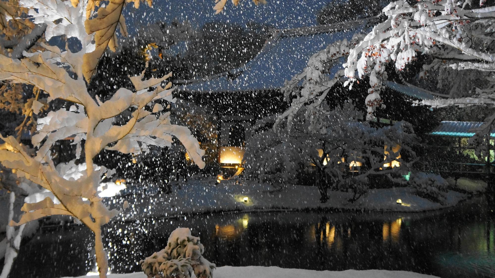 雪が映し出される幻想的な高台寺の冬景色