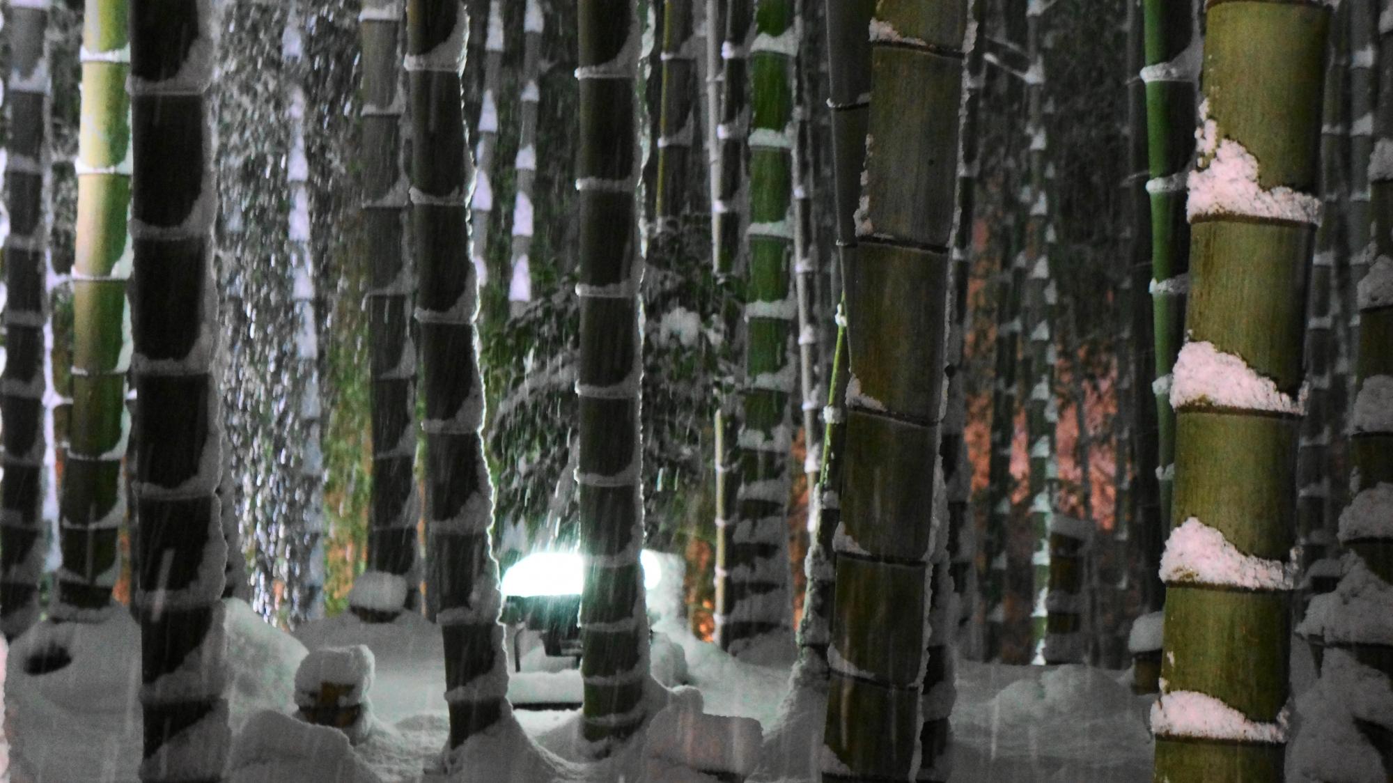 竹の節にも雪が積もる竹林の冬景色