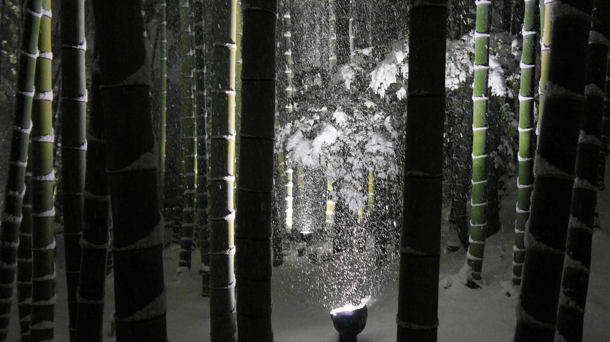 高台寺の竹林の明暗と綺麗なコントラスト