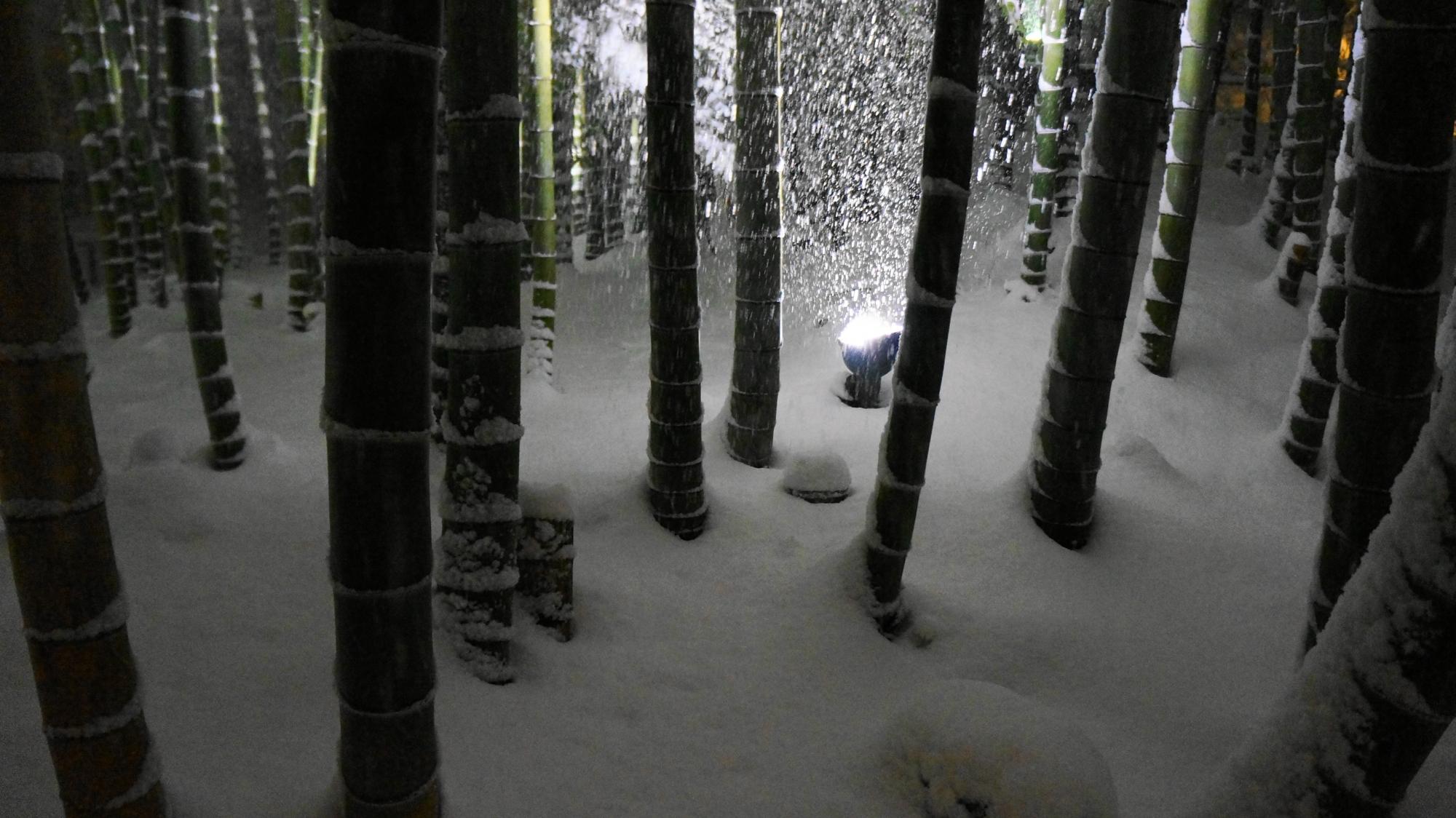 高台寺の竹林の下のふかふかの雪