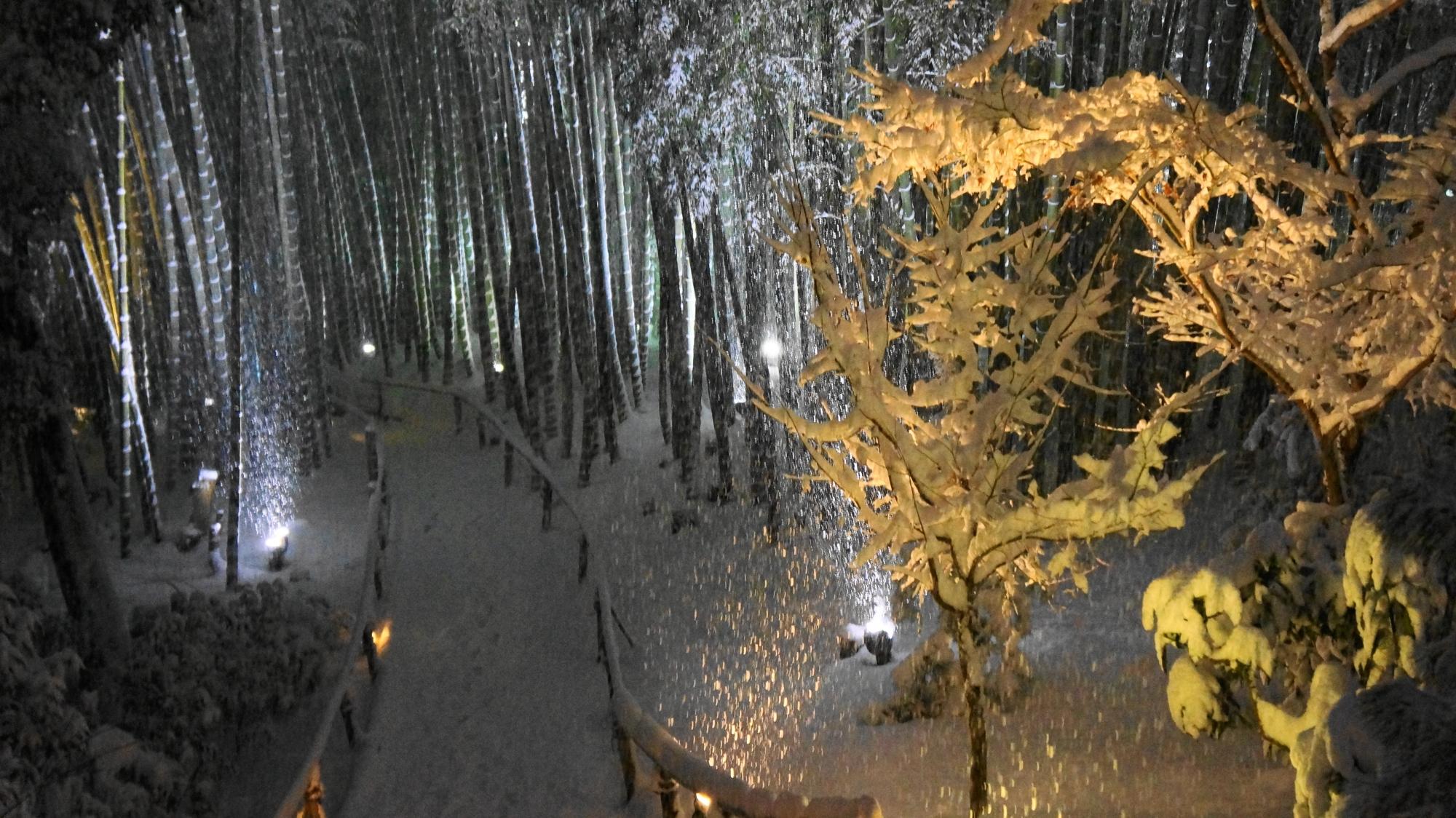 高画質 高台寺 竹林 雪 写真
