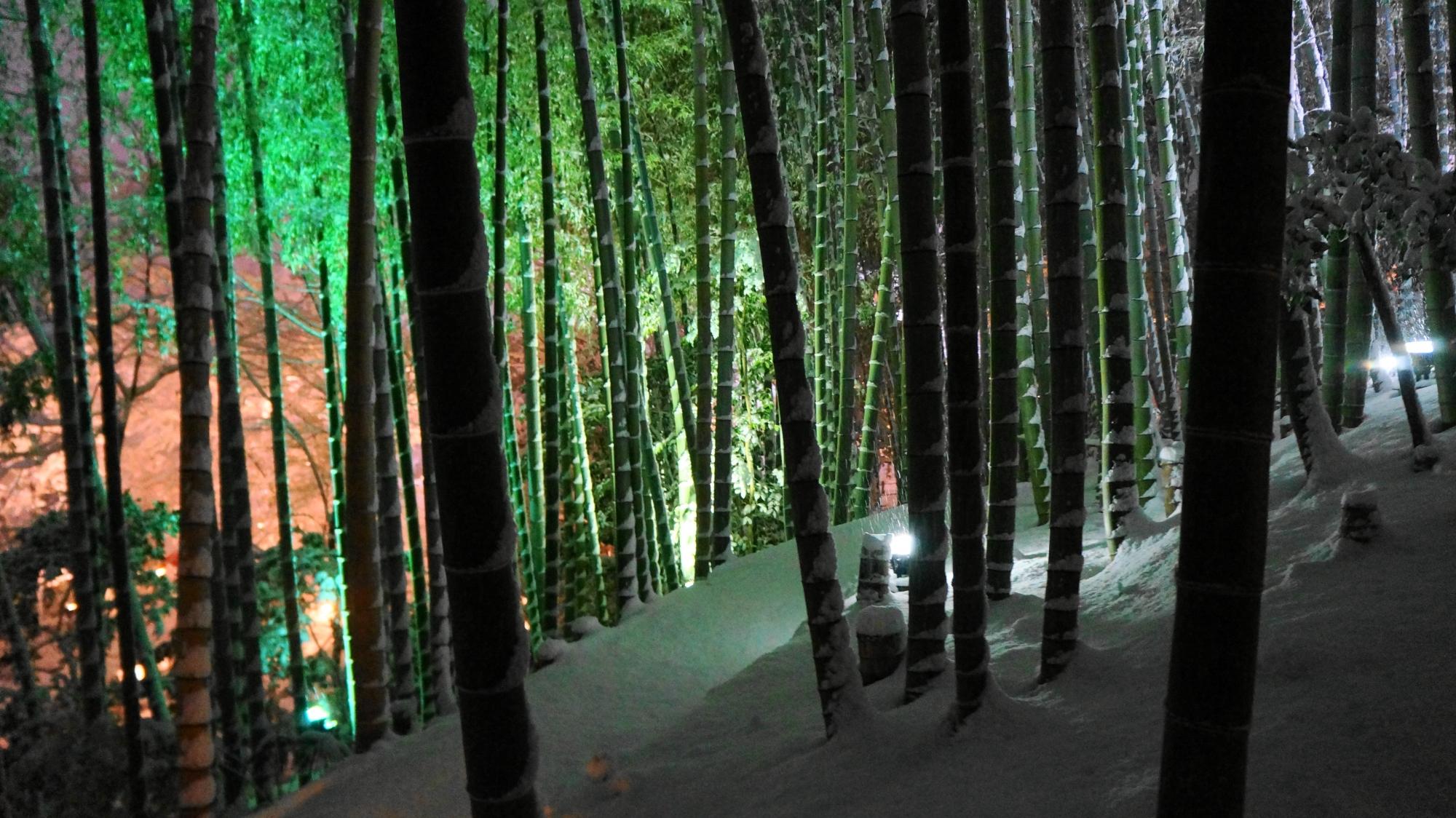高台寺のライトに照らされ浮かび上がる雪の竹林や木々