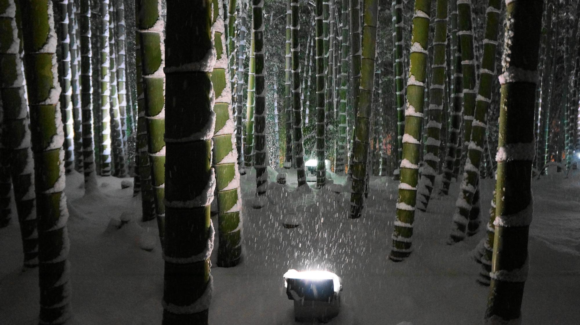 高台寺の圧巻の竹林の雪景色