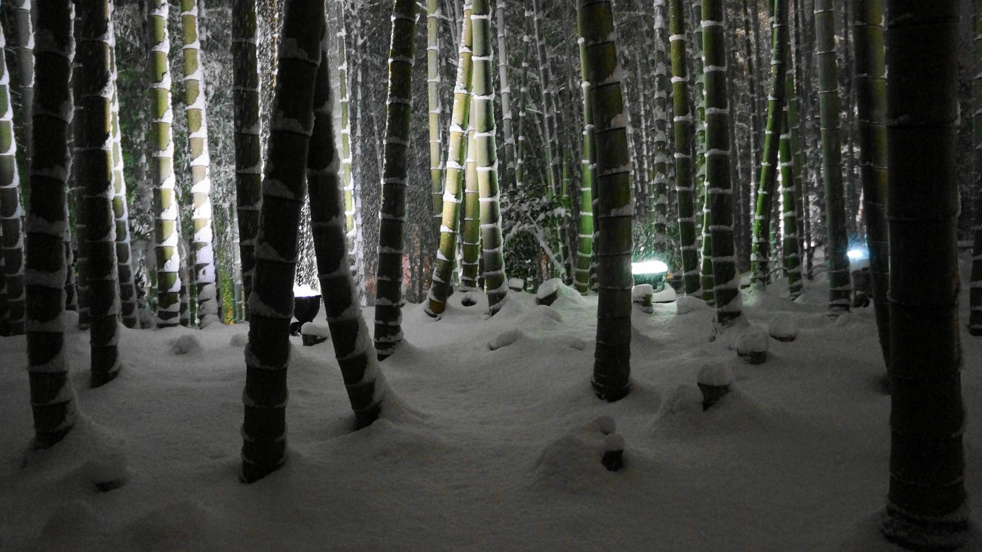 静けさが漂う雪の竹林