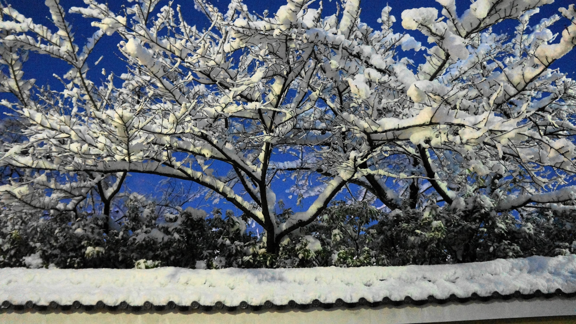 建仁寺の見事な雪の花
