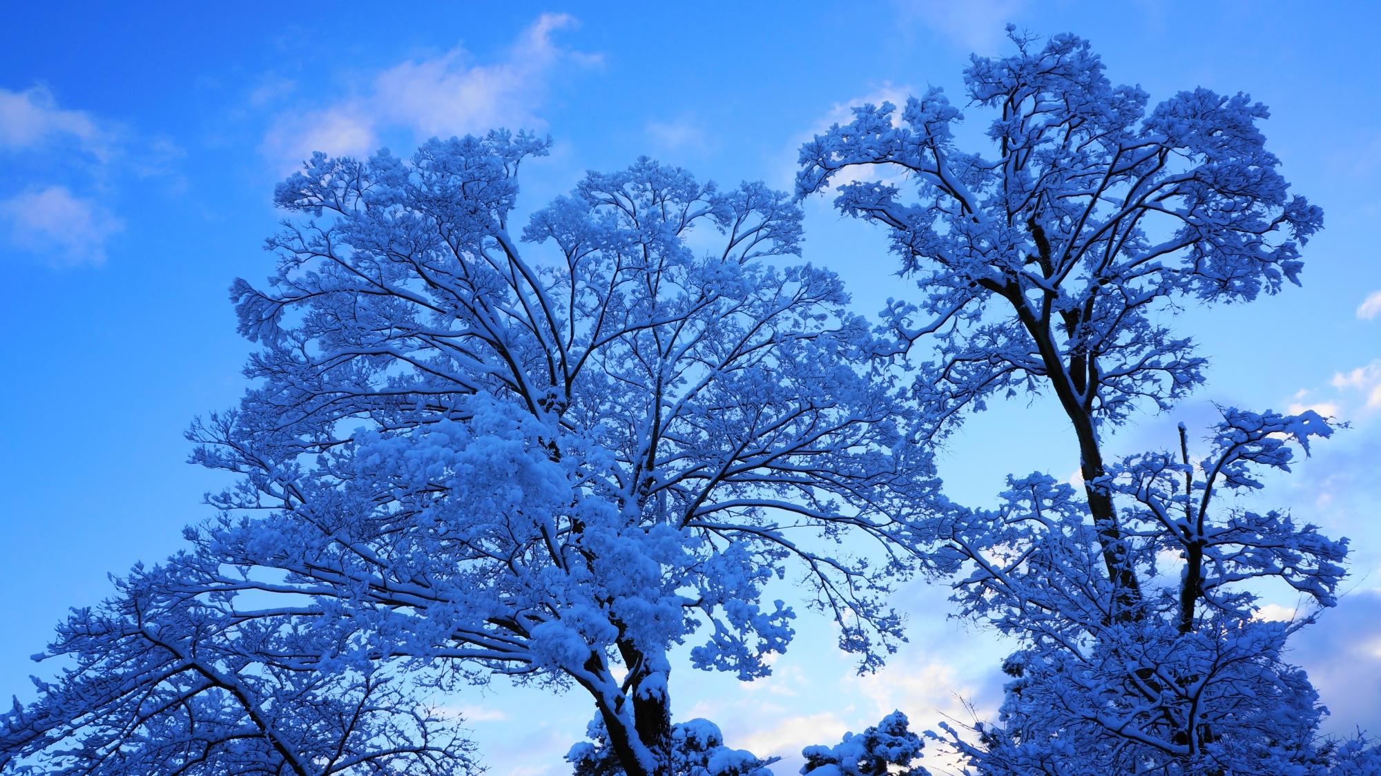 自然が創り出す芸術作品の雪の積もった枝