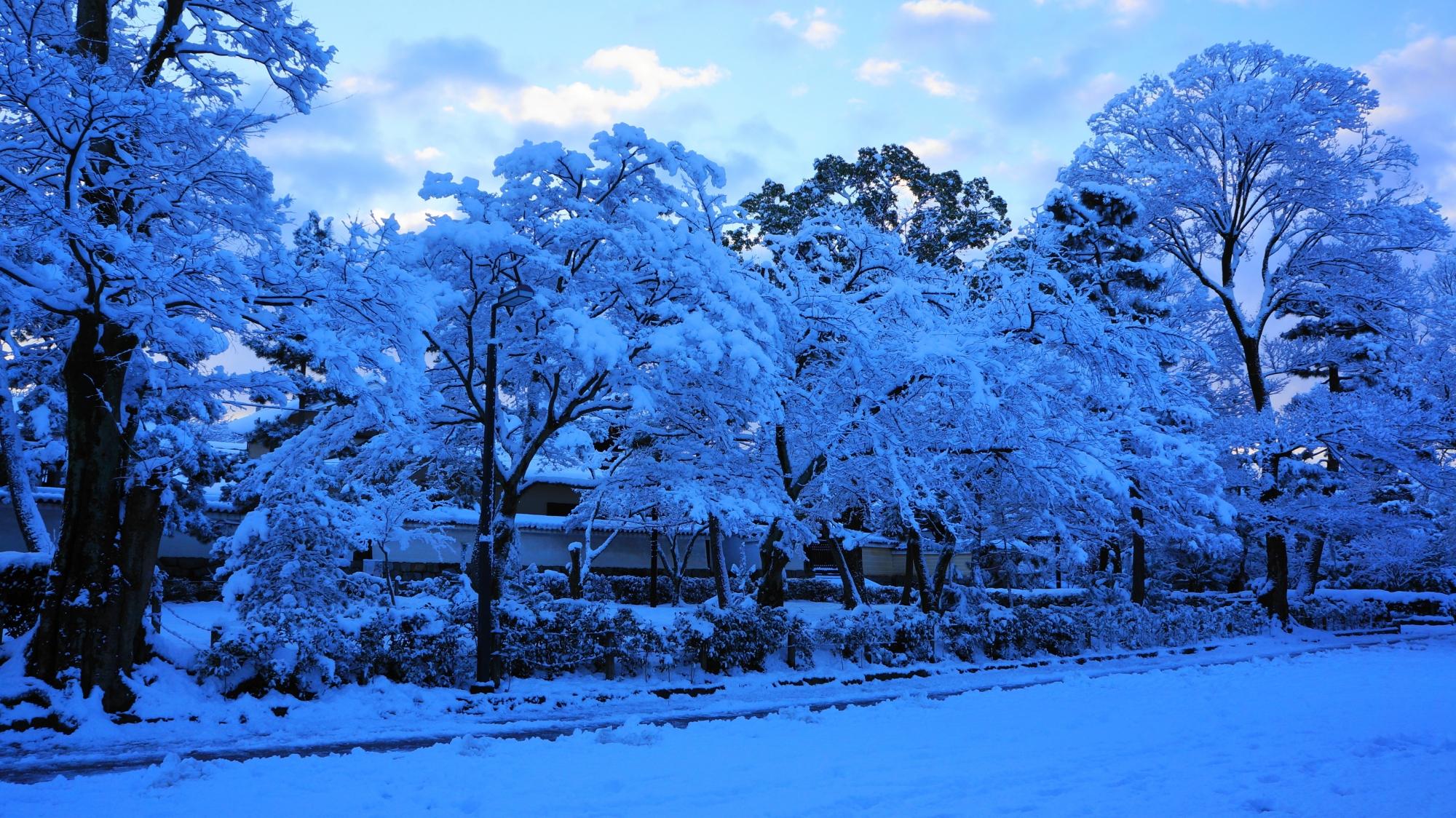建仁寺の真っ白にそまった境内に咲く満開の雪の花