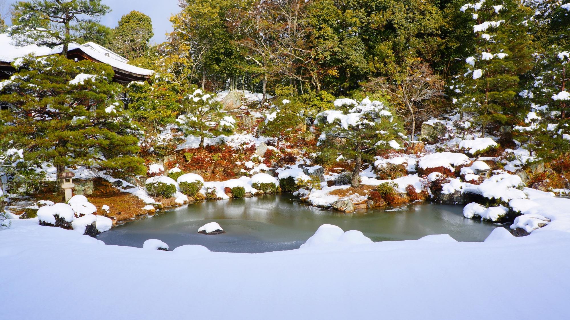 木の雪がどんどん落ちていく仁和寺