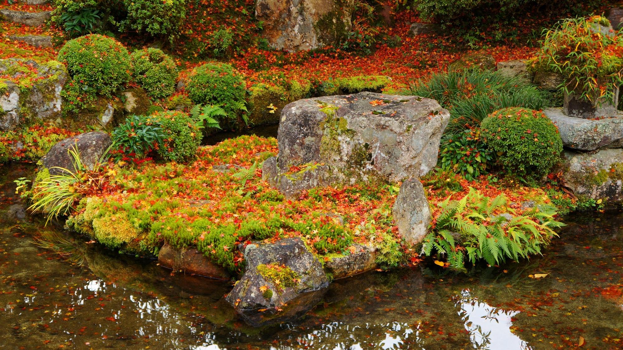 実光院の綺麗な鮮やかな散り紅葉