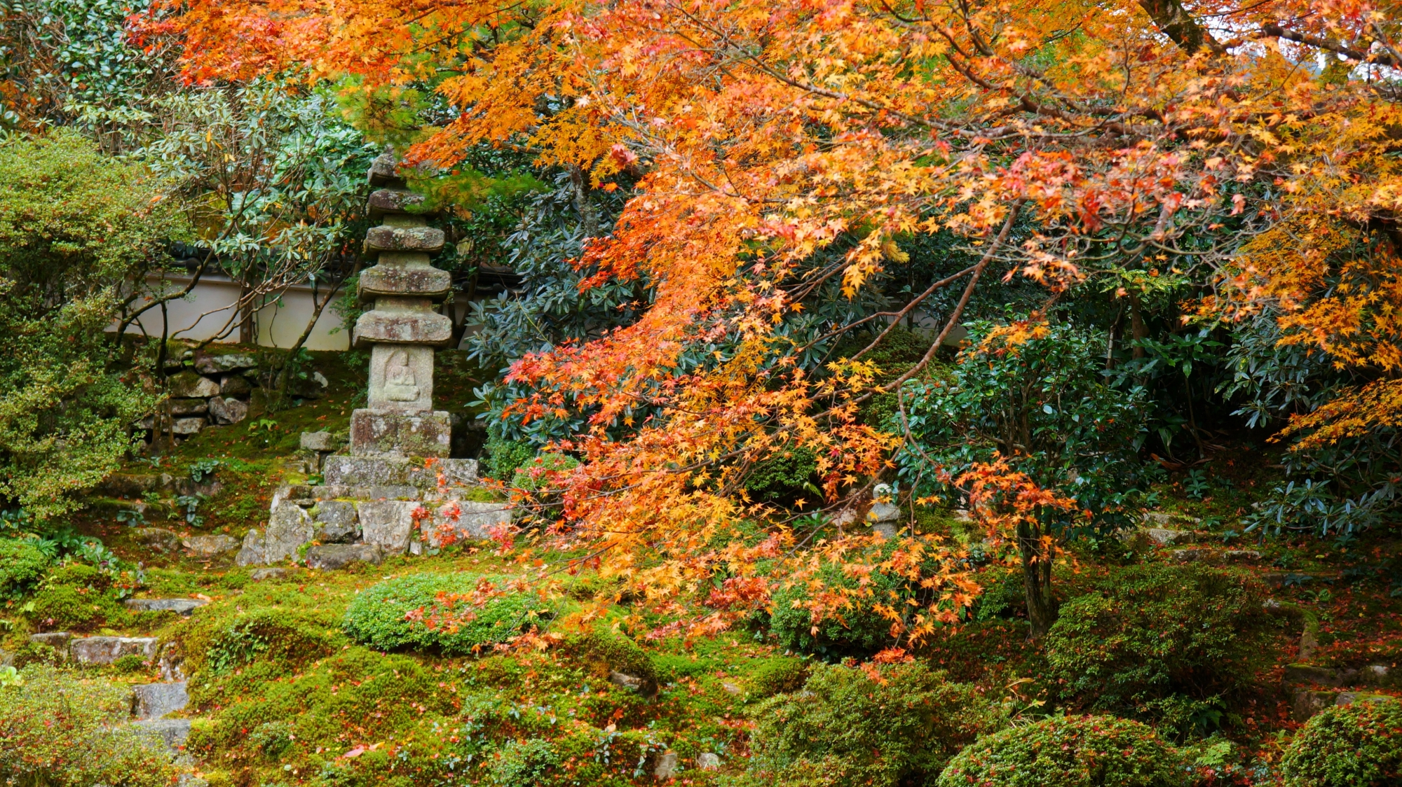 優しい紅葉に彩られた苔や石塔