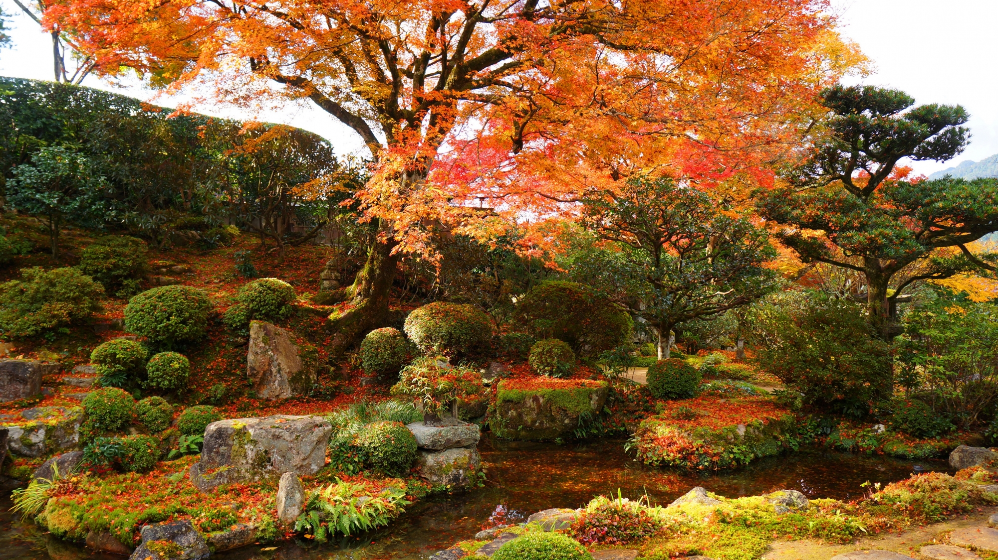 見ごろの紅葉と秋色に覆われた旧普賢院庭園