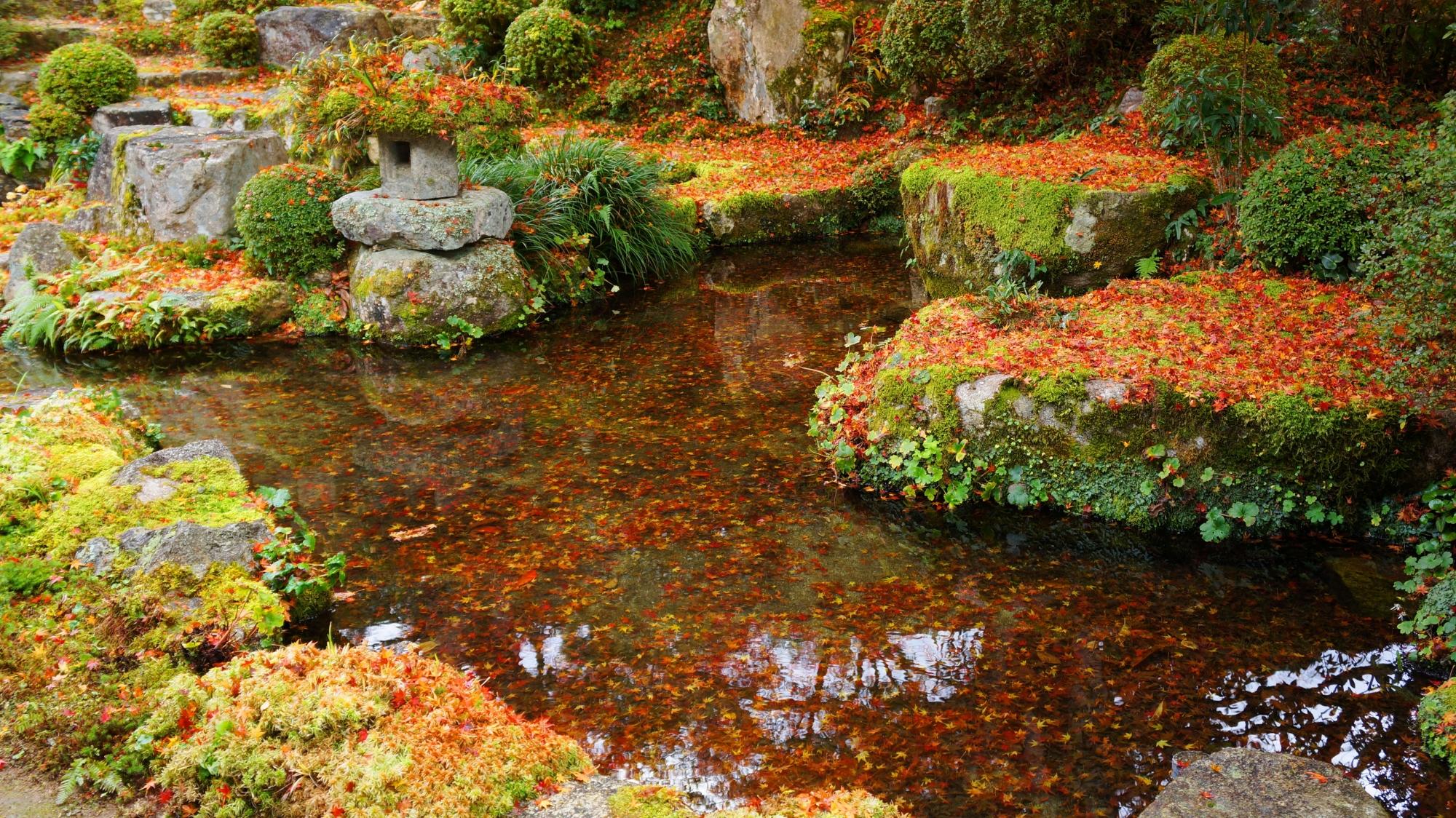 鮮やかな色合いを見せてくれる水の中に沈んだ散り紅葉