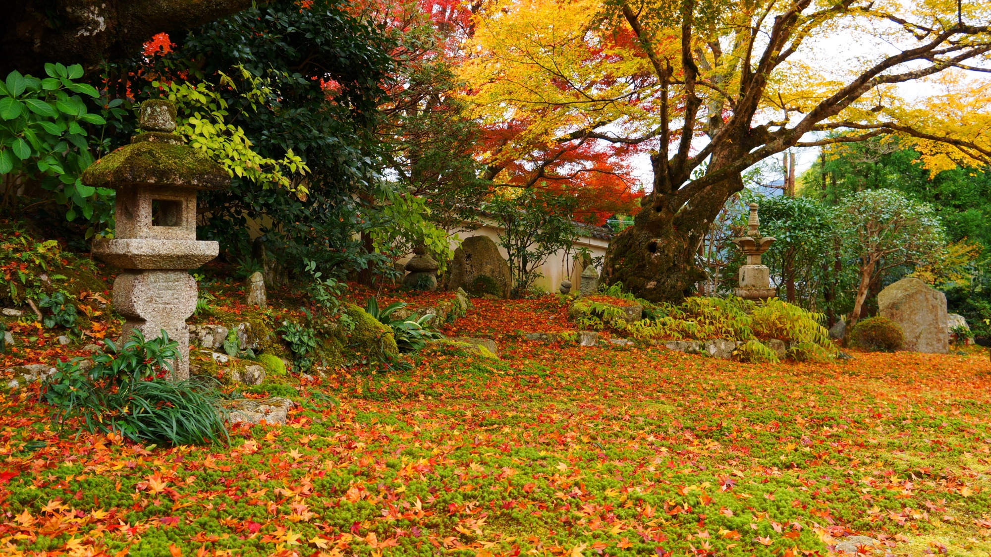 緑の苔の上の色鮮やかな美しい散り紅葉