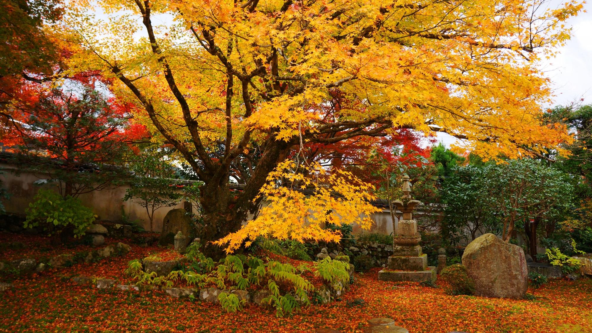 色とりどりの紅葉につつまれる実光院の庭園