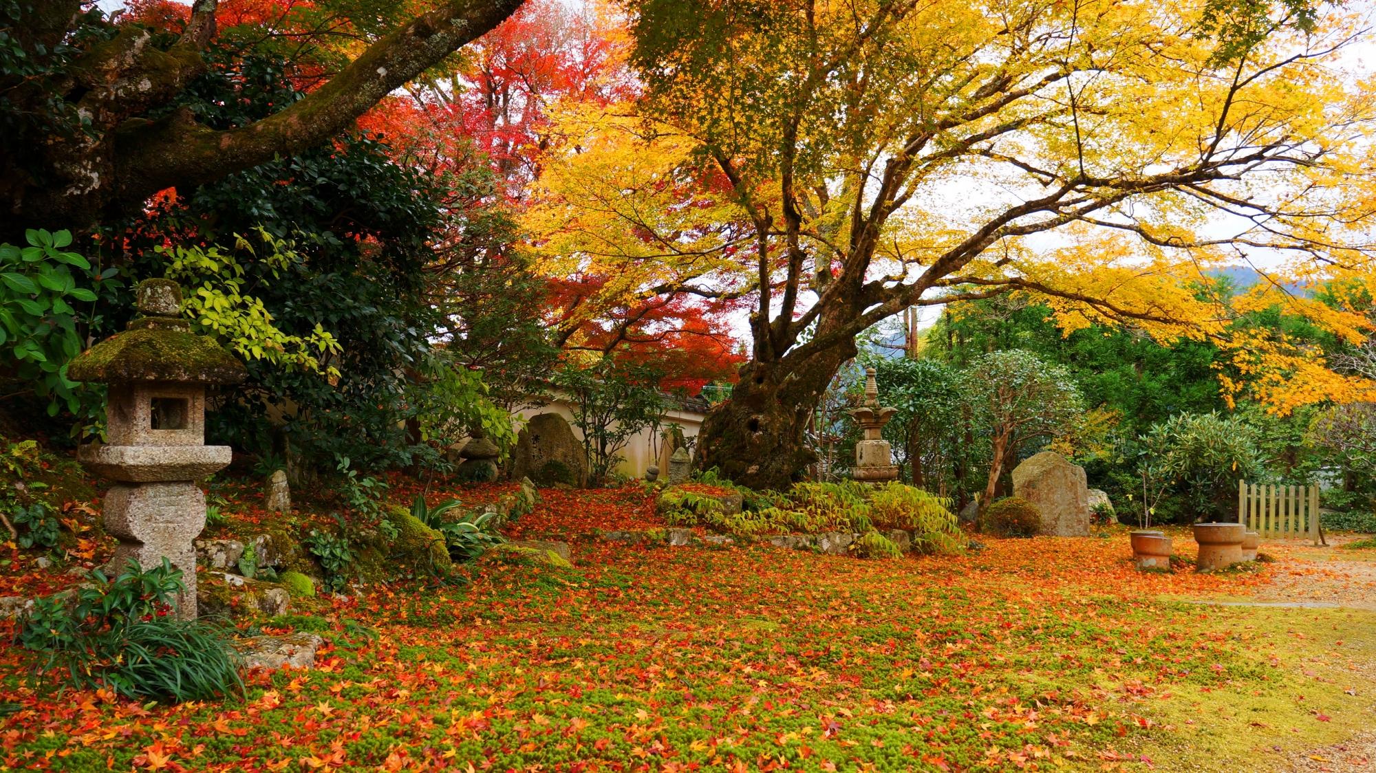 深みのある庭園を彩る見ごろの紅葉