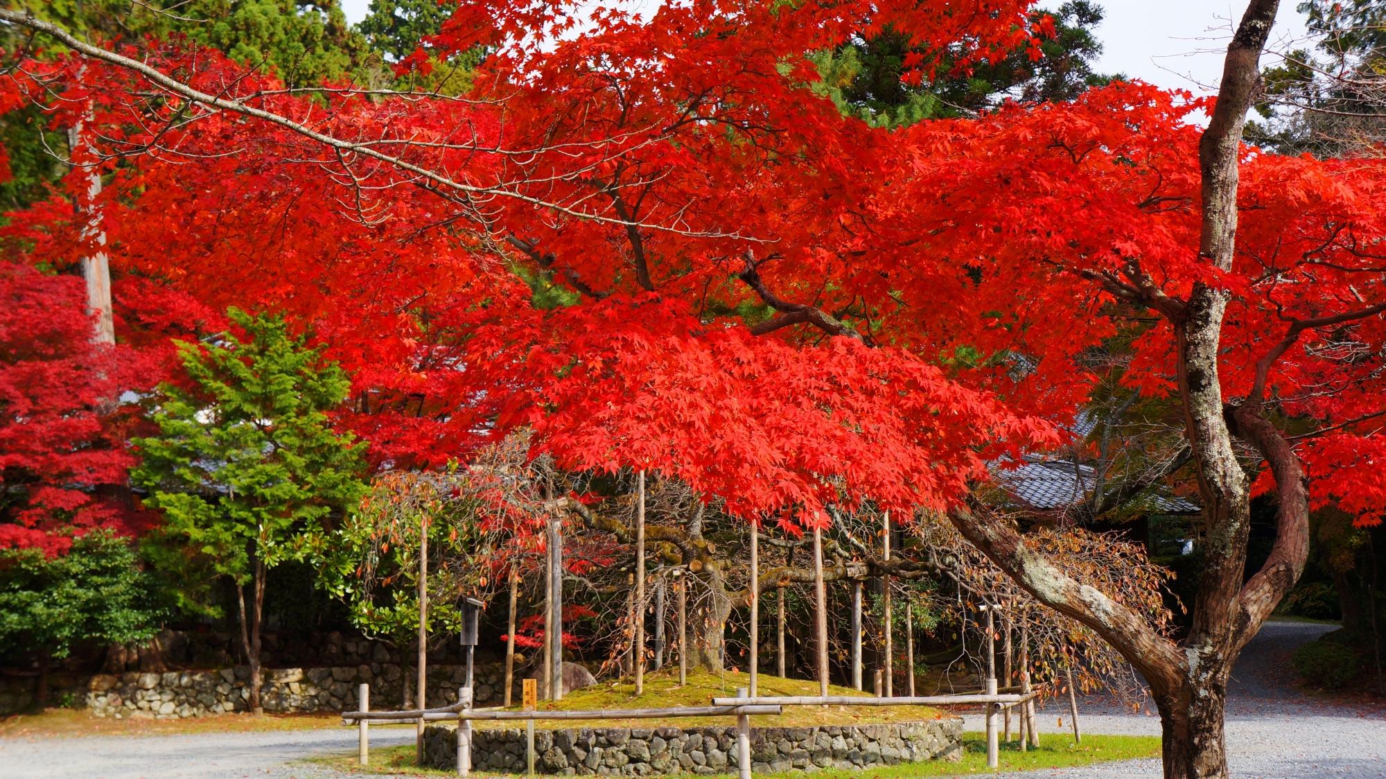 大原野神社の千眼桜付近の紅葉