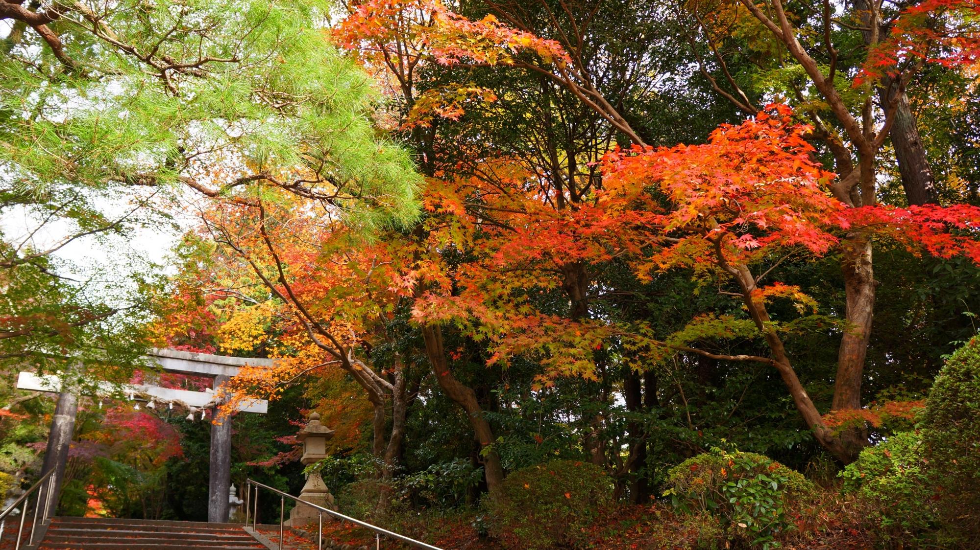 オレンジ色の華やかな紅葉