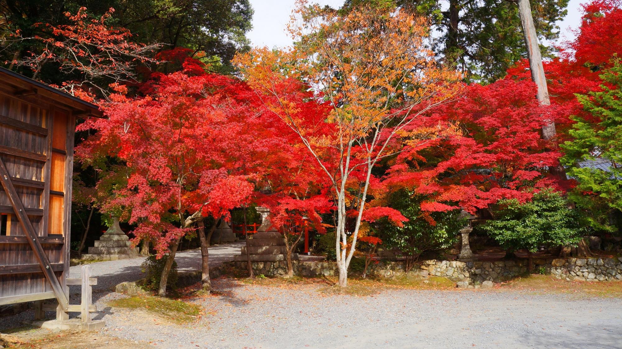 静かな境内の燃え上がるよな赤い紅葉