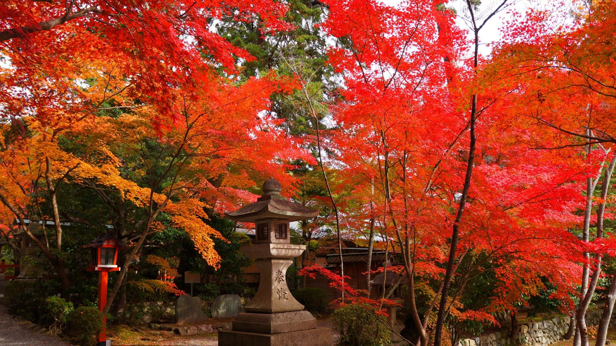 千眼桜付近の華やかな紅葉