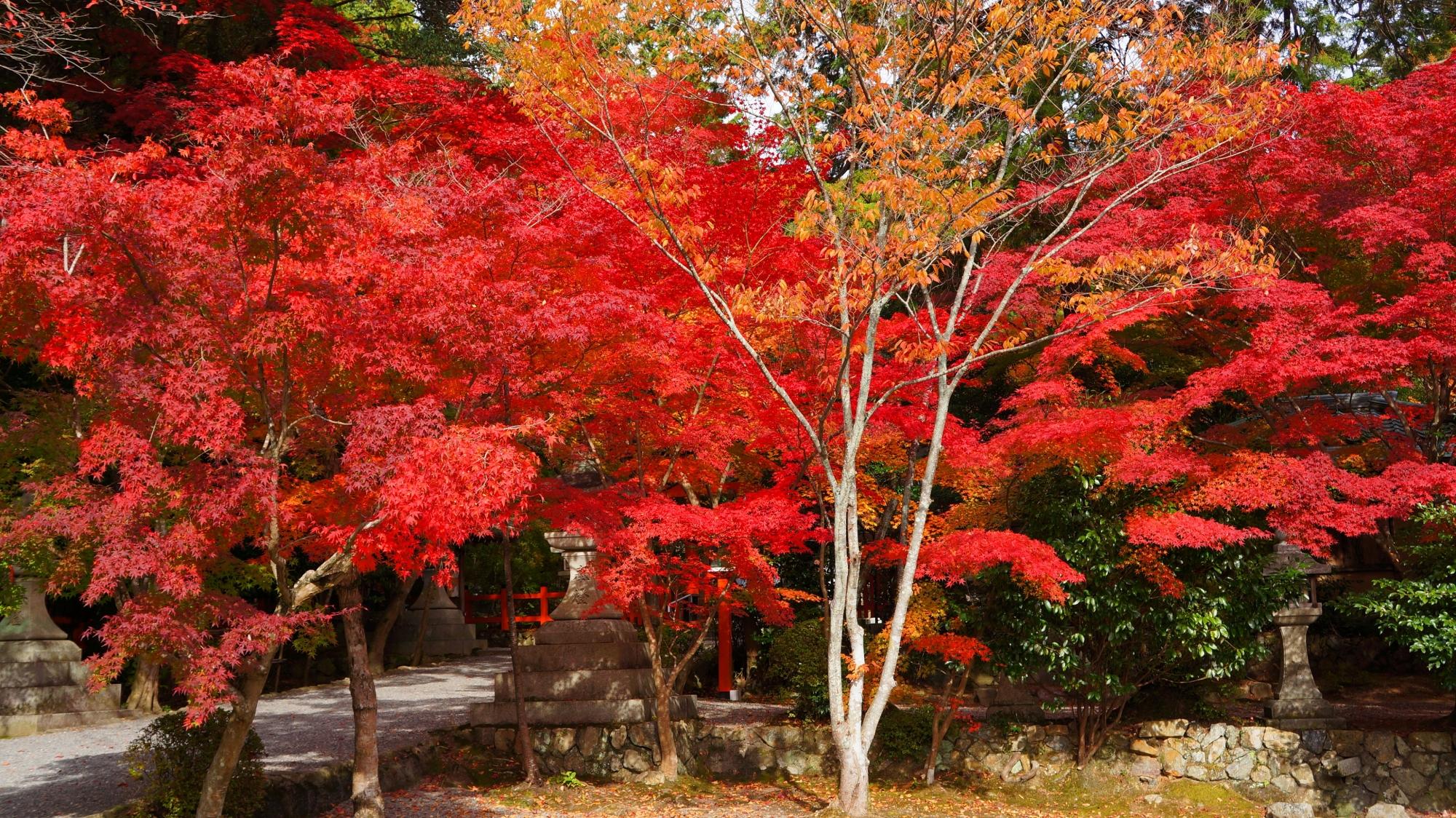 溢れる鮮やかに色づいた紅葉と豪快な秋の彩り
