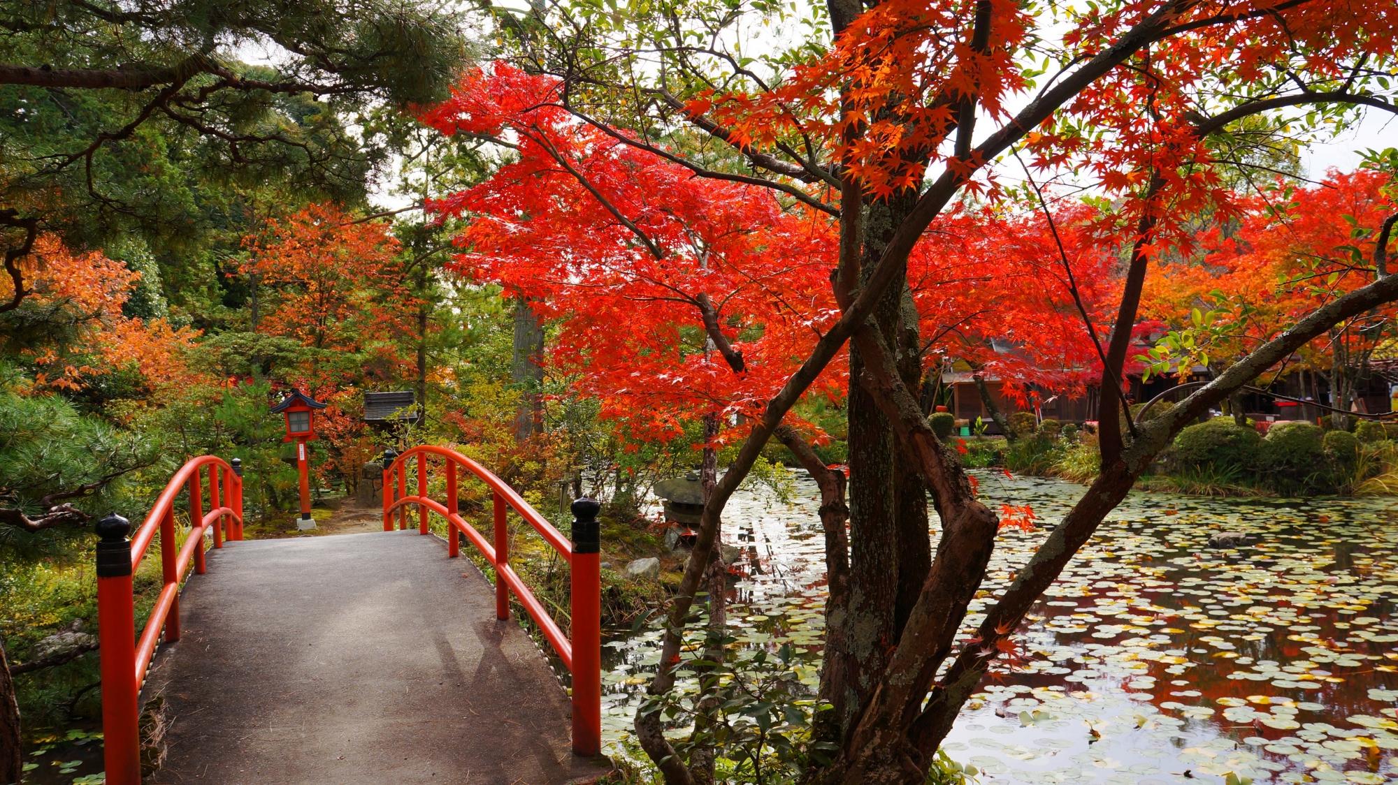 鯉沢の池の風情ある美しい紅葉