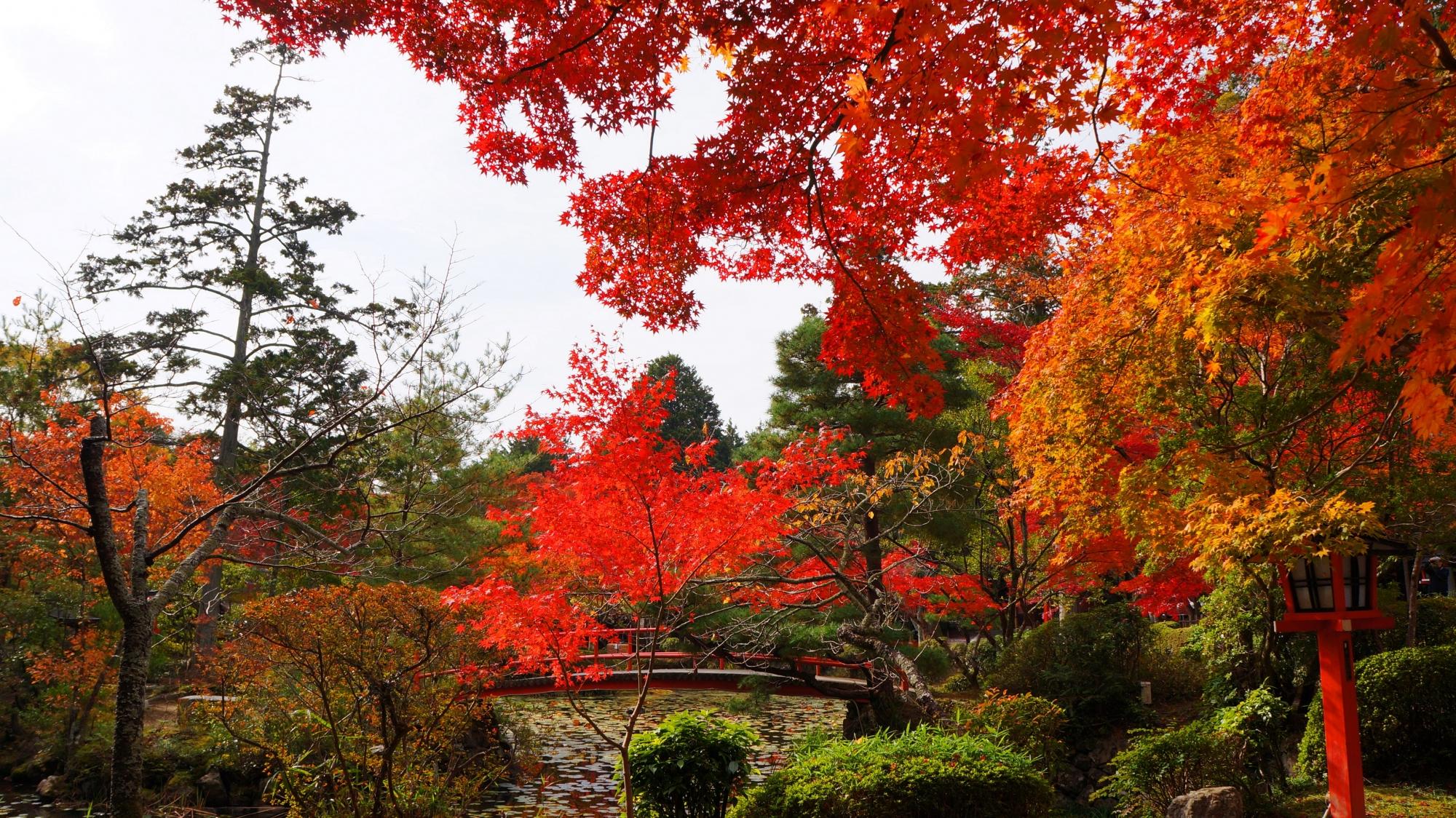 色とりどりの紅葉が溢れる大原野神社の鯉沢の池