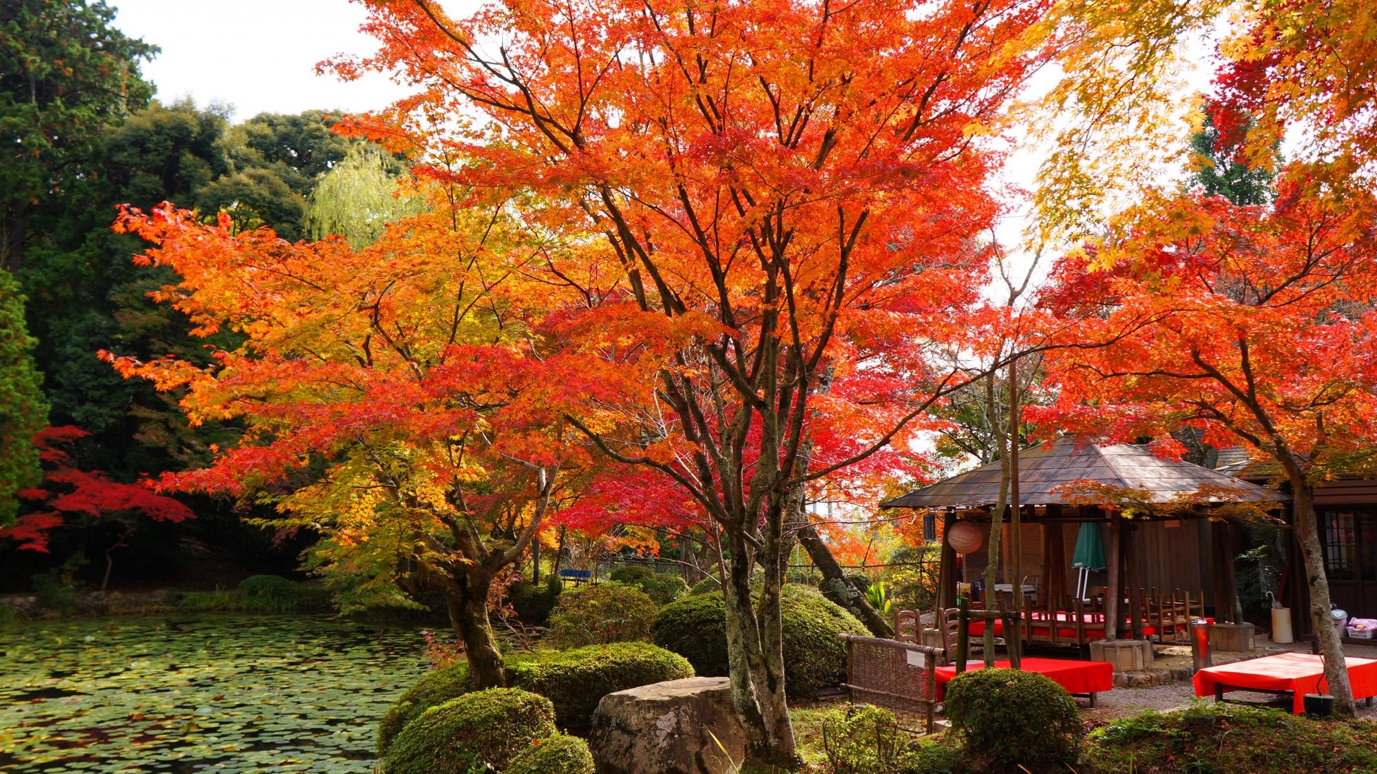 茶所が良い味を出す水辺を染める絶品の紅葉