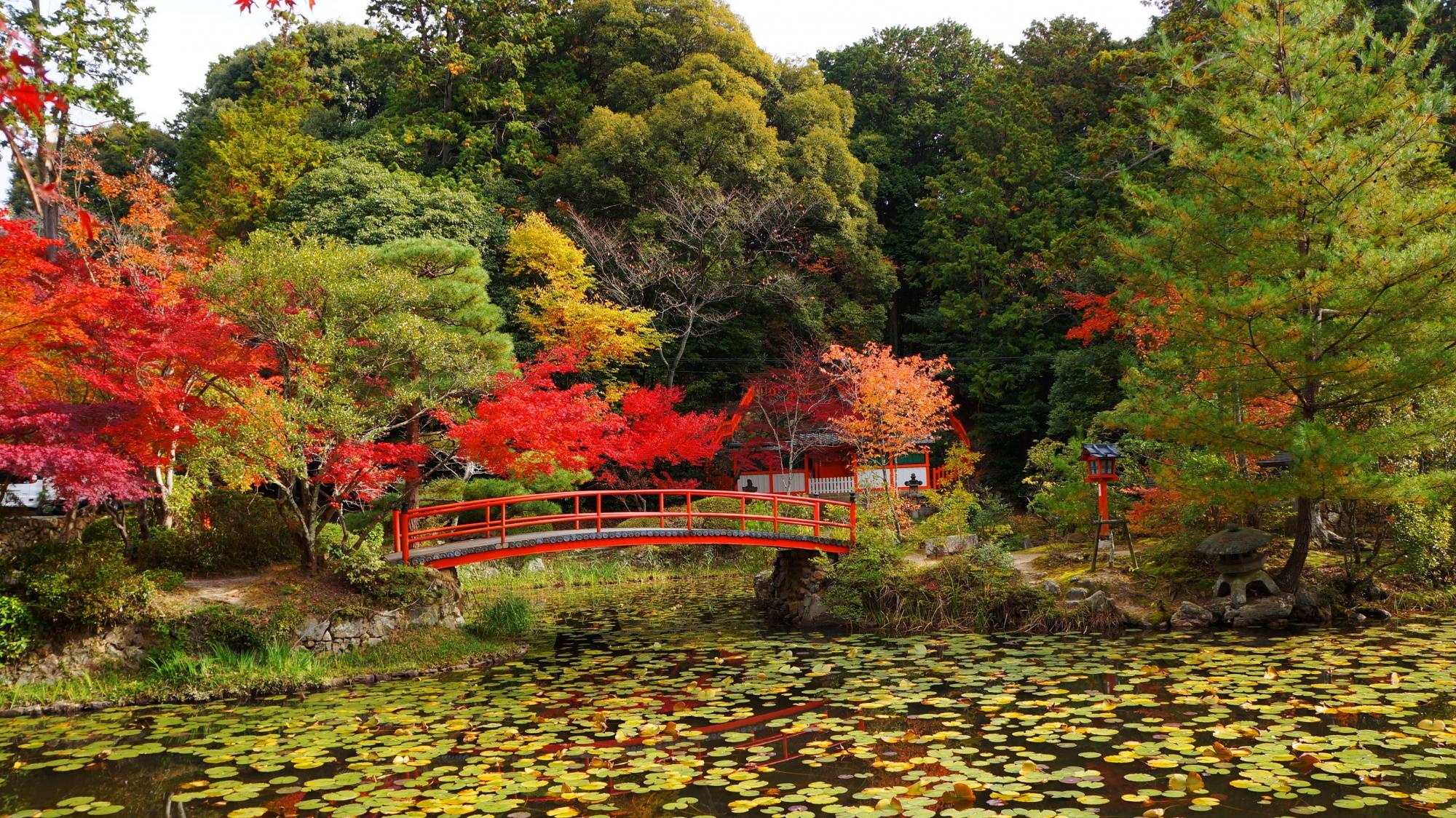 大原野神社の鯉沢の池と紅葉
