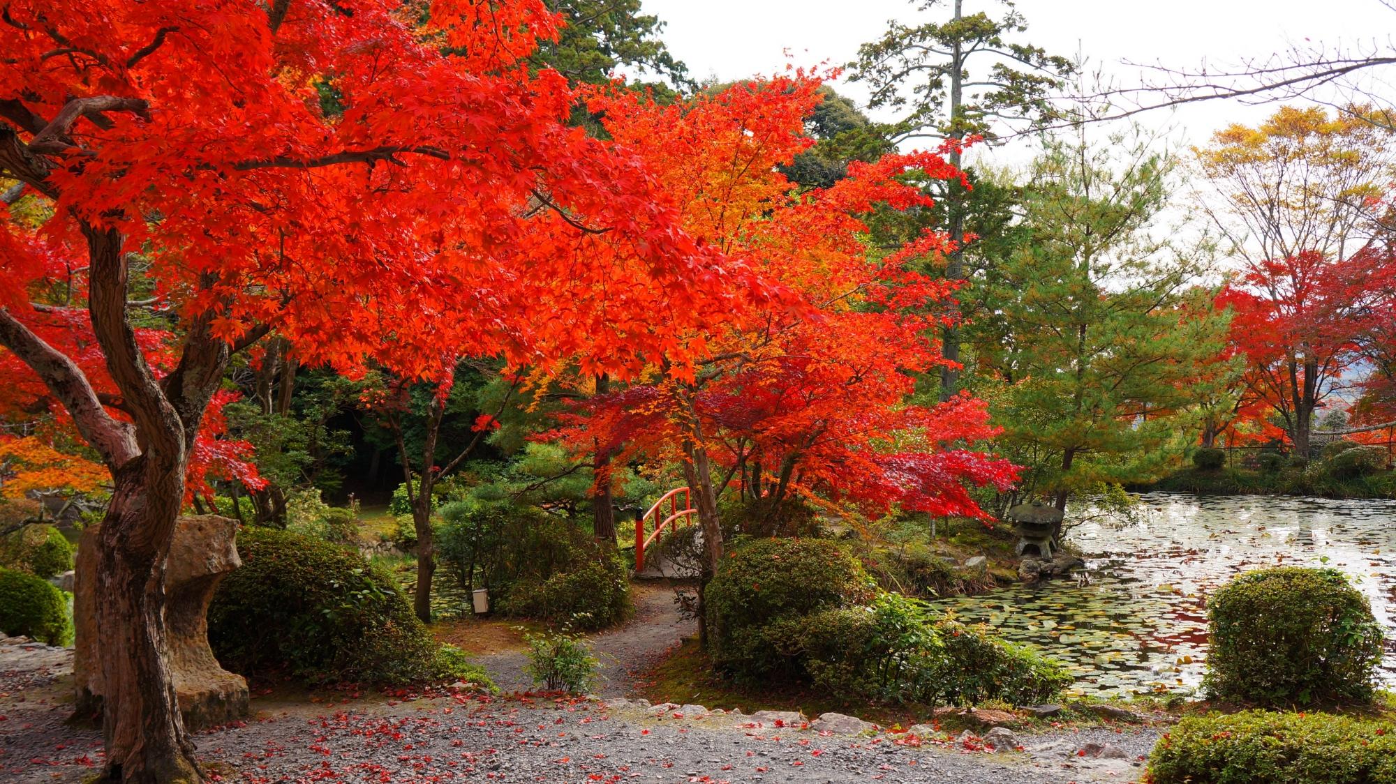池の畔の絵になる華やかな紅葉
