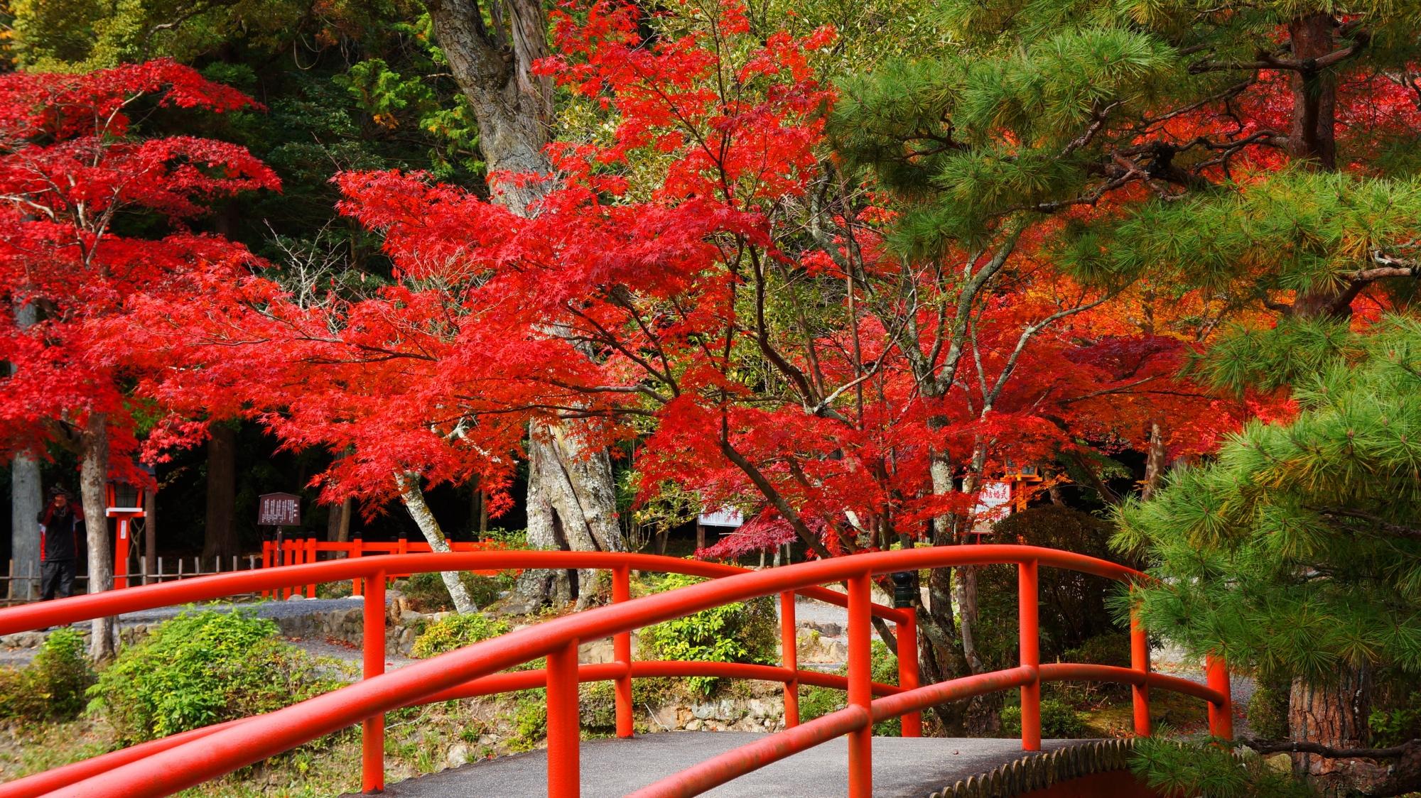鯉沢の池の赤い橋と華やぐ赤い紅葉