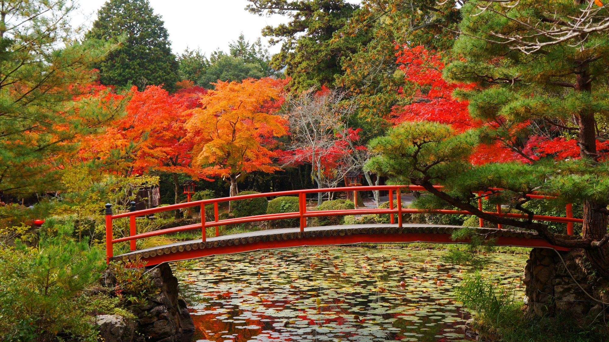 橋の向こうで綺麗に色づく紅葉