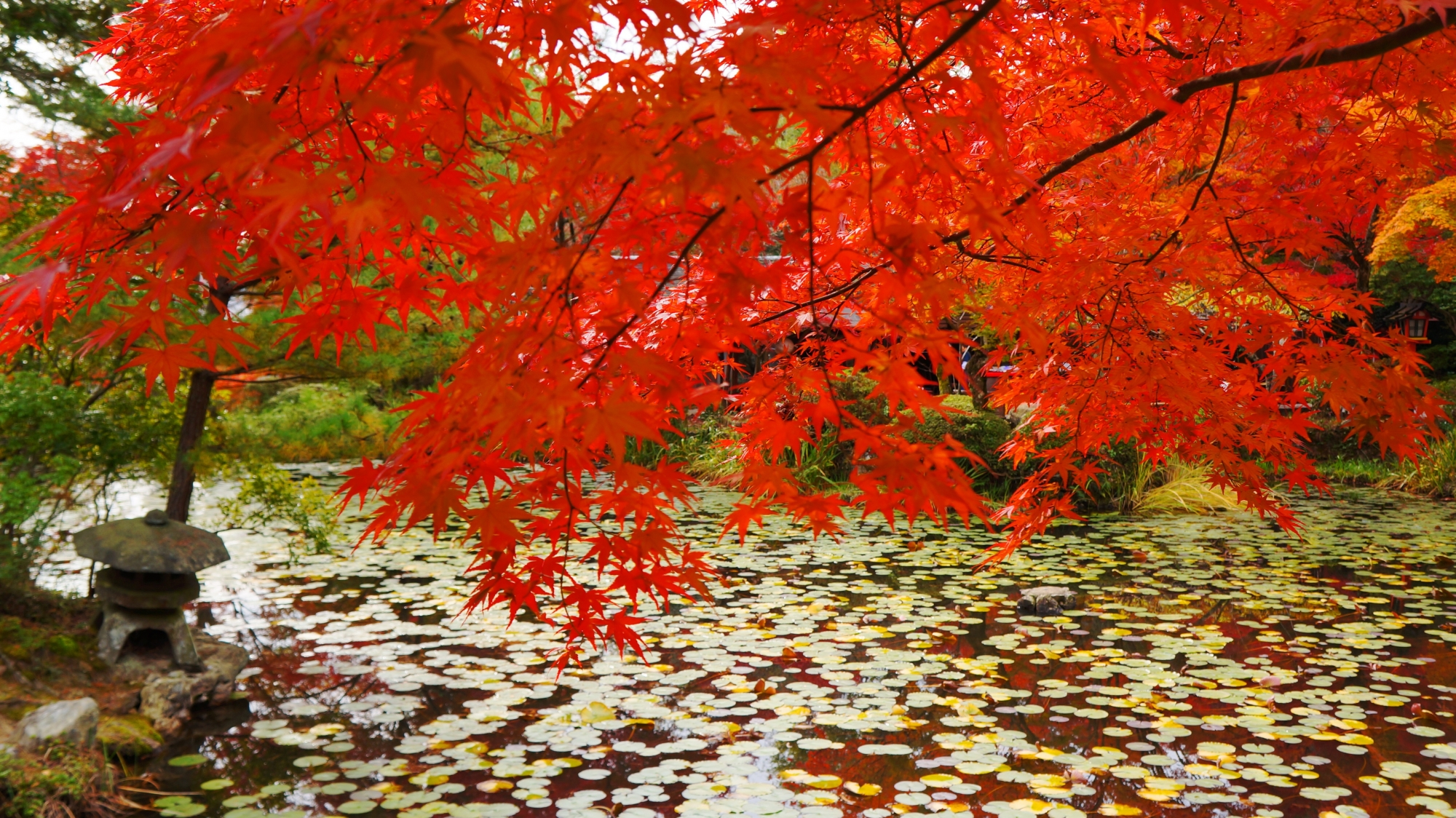 池の畔の小さな蟷螂と紅葉