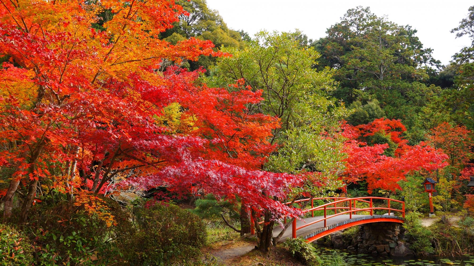 高画質 写真 鯉沢の池 紅葉 大原野神社