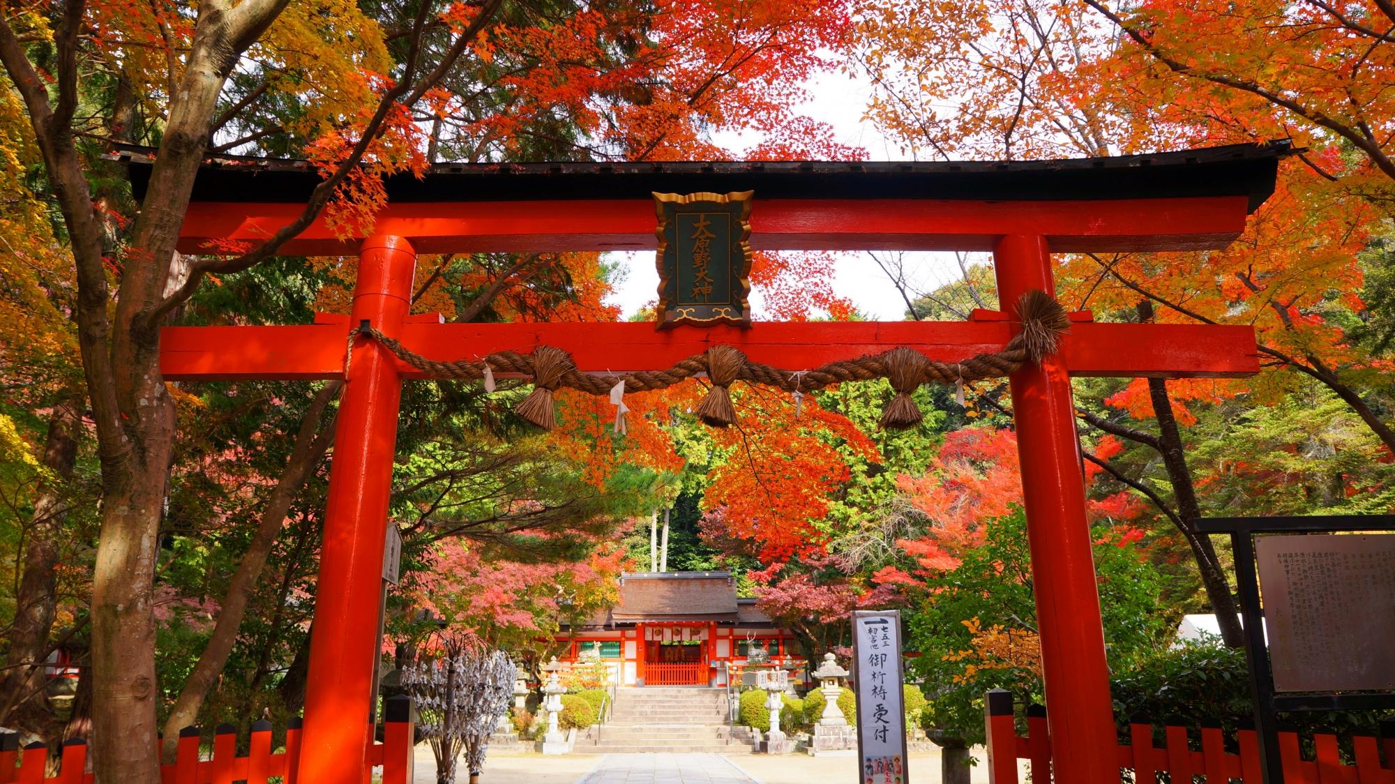 大原野神社の鳥居と本殿の秋の彩り