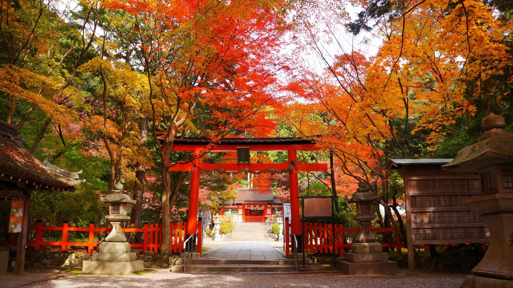 高画質 紅葉 写真 大原野神社