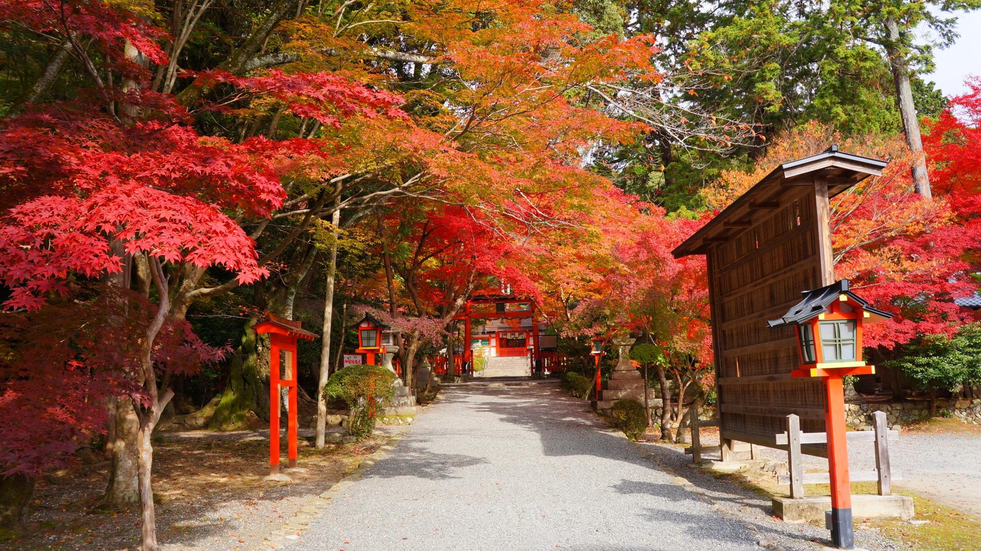 大原野神社の三ノ鳥居と紅葉