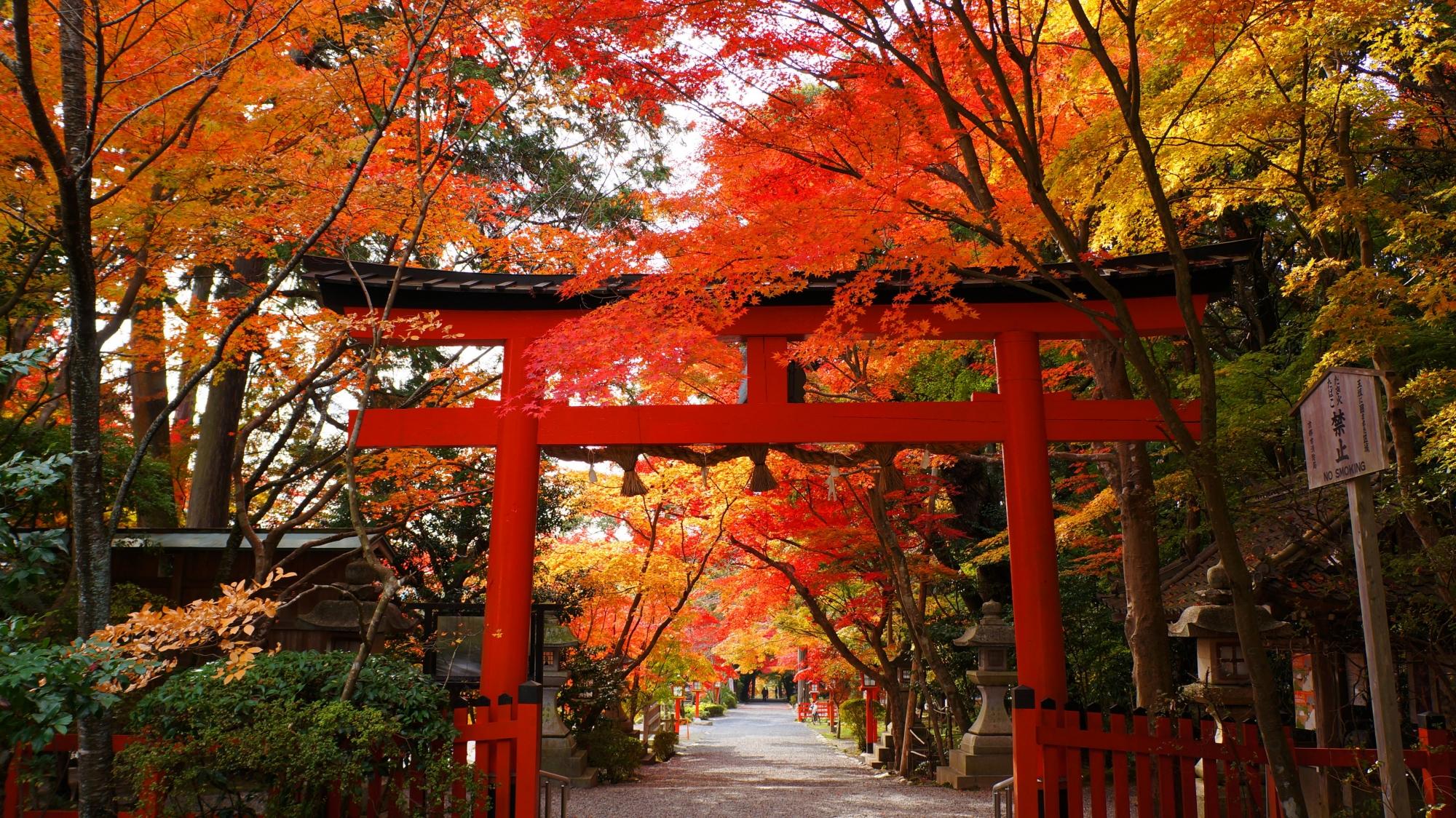 大原野神社の素晴らしい秋色につつまれた鳥居と長い参道
