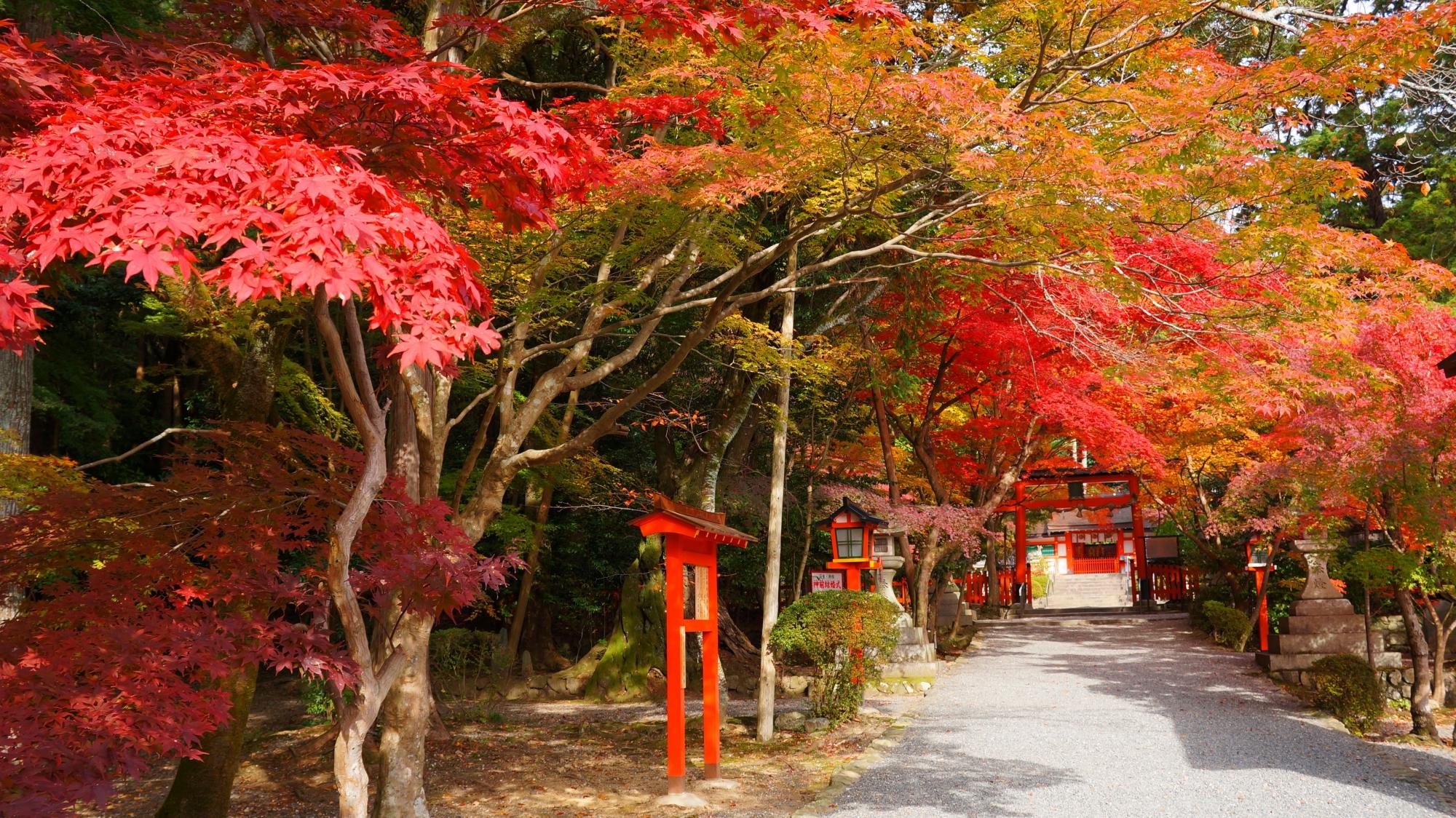 大原野神社の長い参道を彩る鮮やかな紅葉