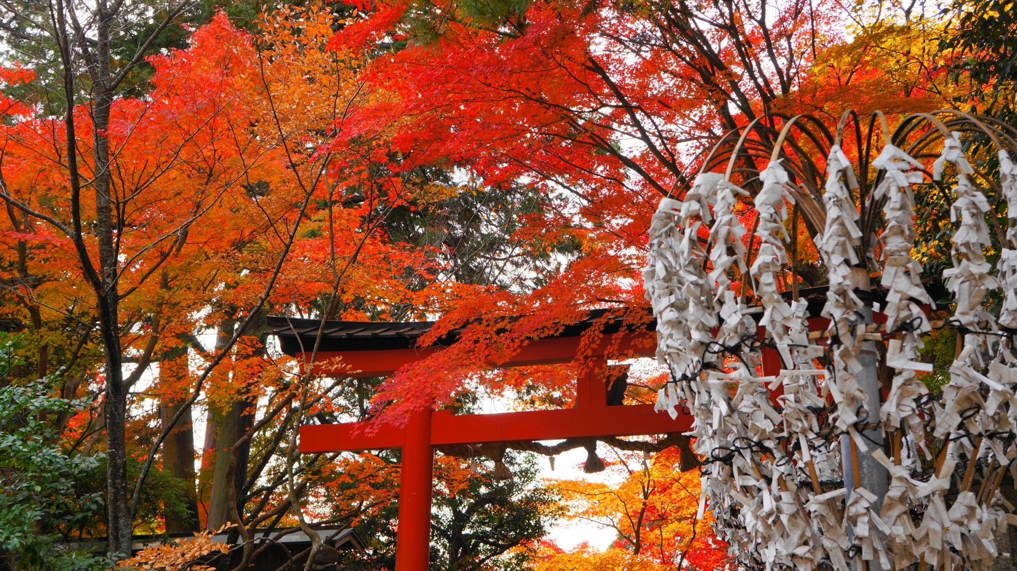 大原野神社の白いおみくじと赤い紅葉