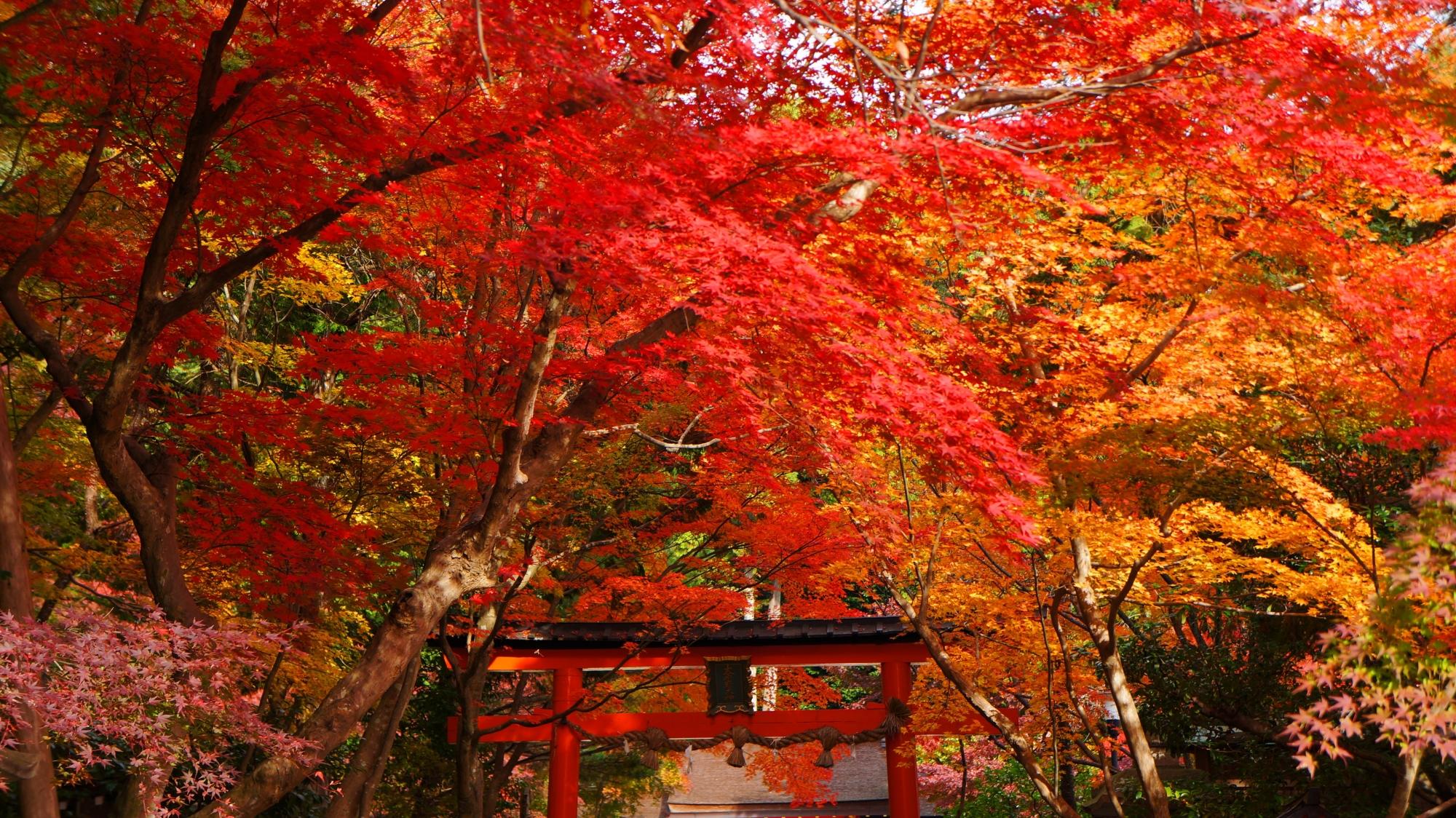 大原野神社 紅葉 写真 高画質