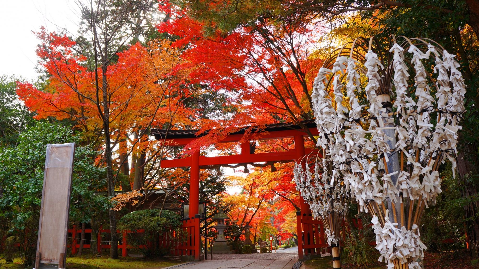 大原野神社の本殿側から眺めた三ノ鳥居と紅葉