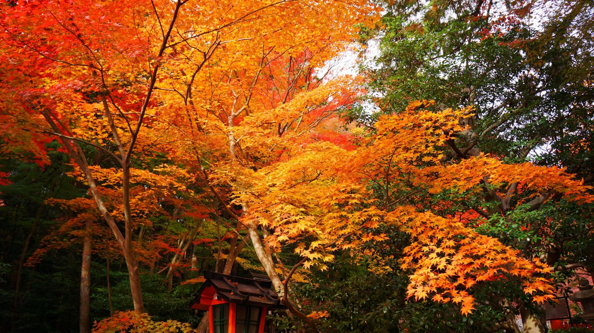 大原野神社の紅葉の空間