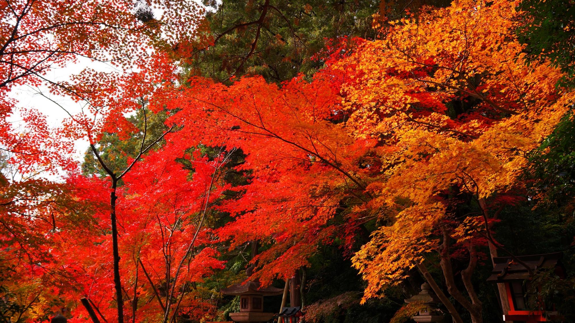 大原野神社の境内をつつむ華やかな紅葉