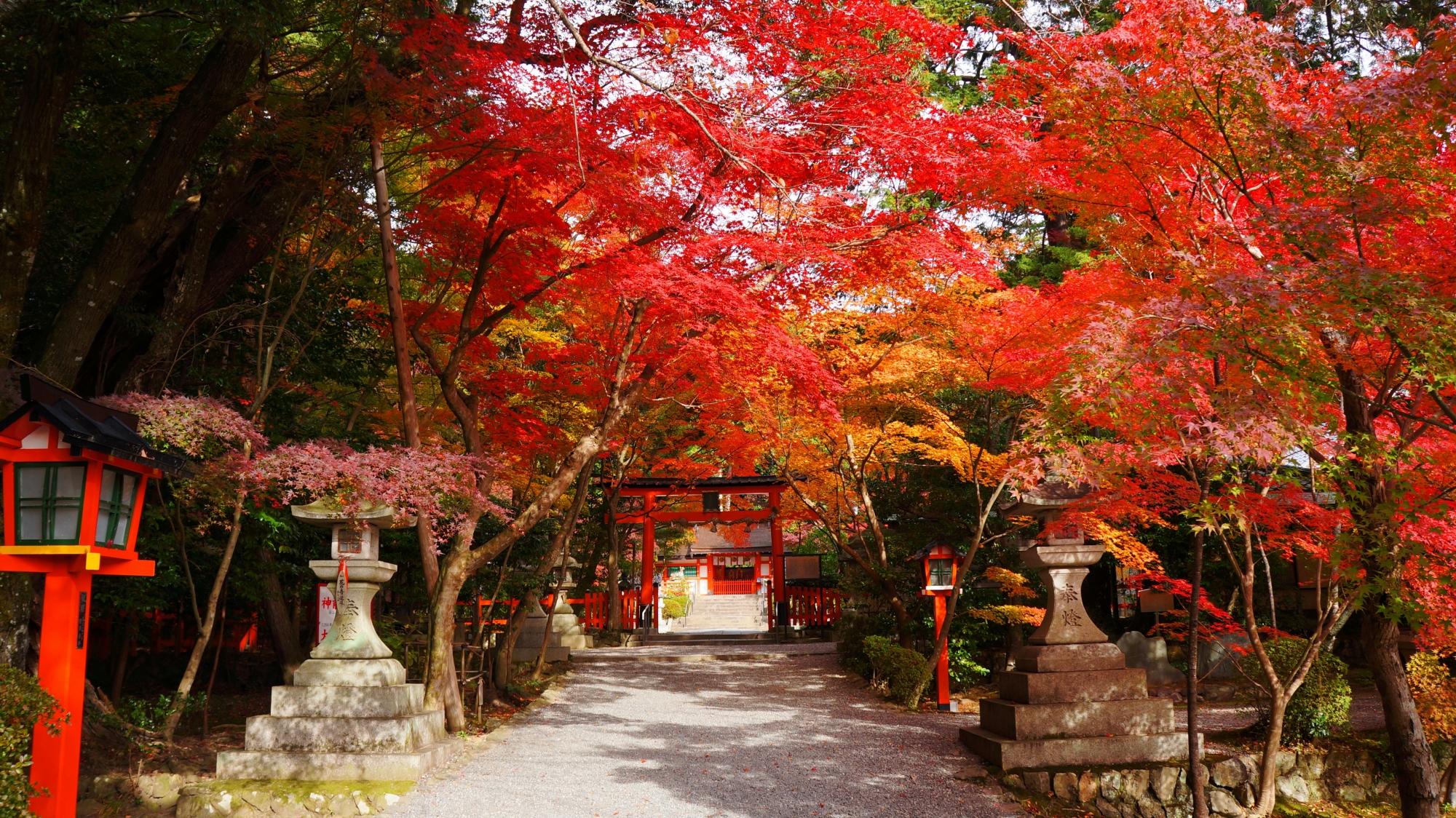 誰もいない大原野神社の素晴らしい紅葉