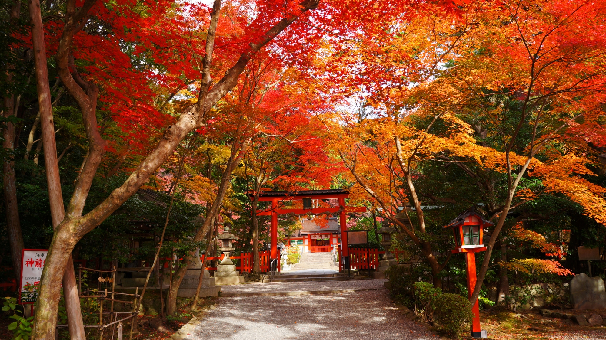 A beautiful autumn leaves coloring Torii-Gate of the Oharanojinjya-Shrine in Kyoto