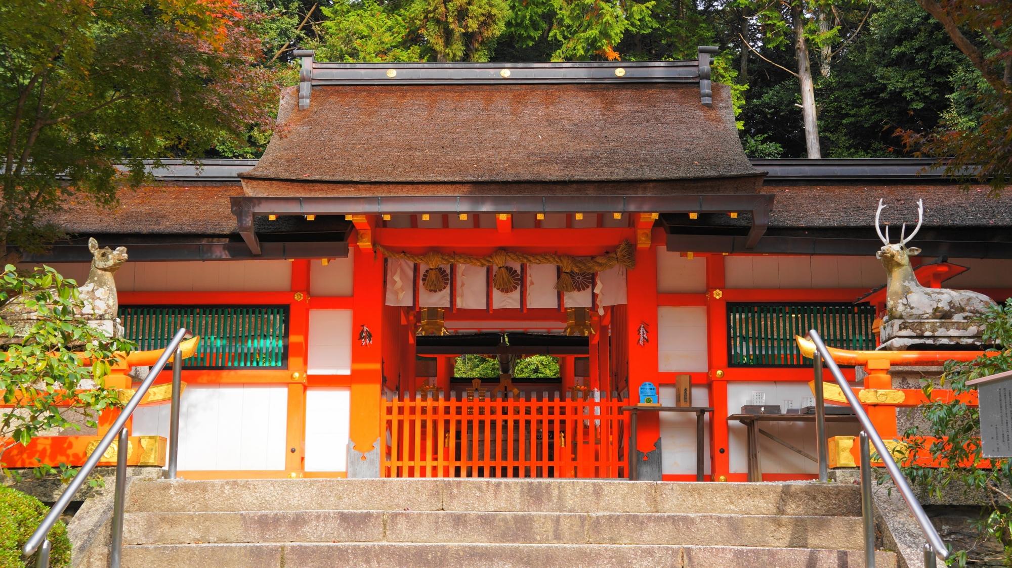 大原野神社の狛鹿さんと本殿