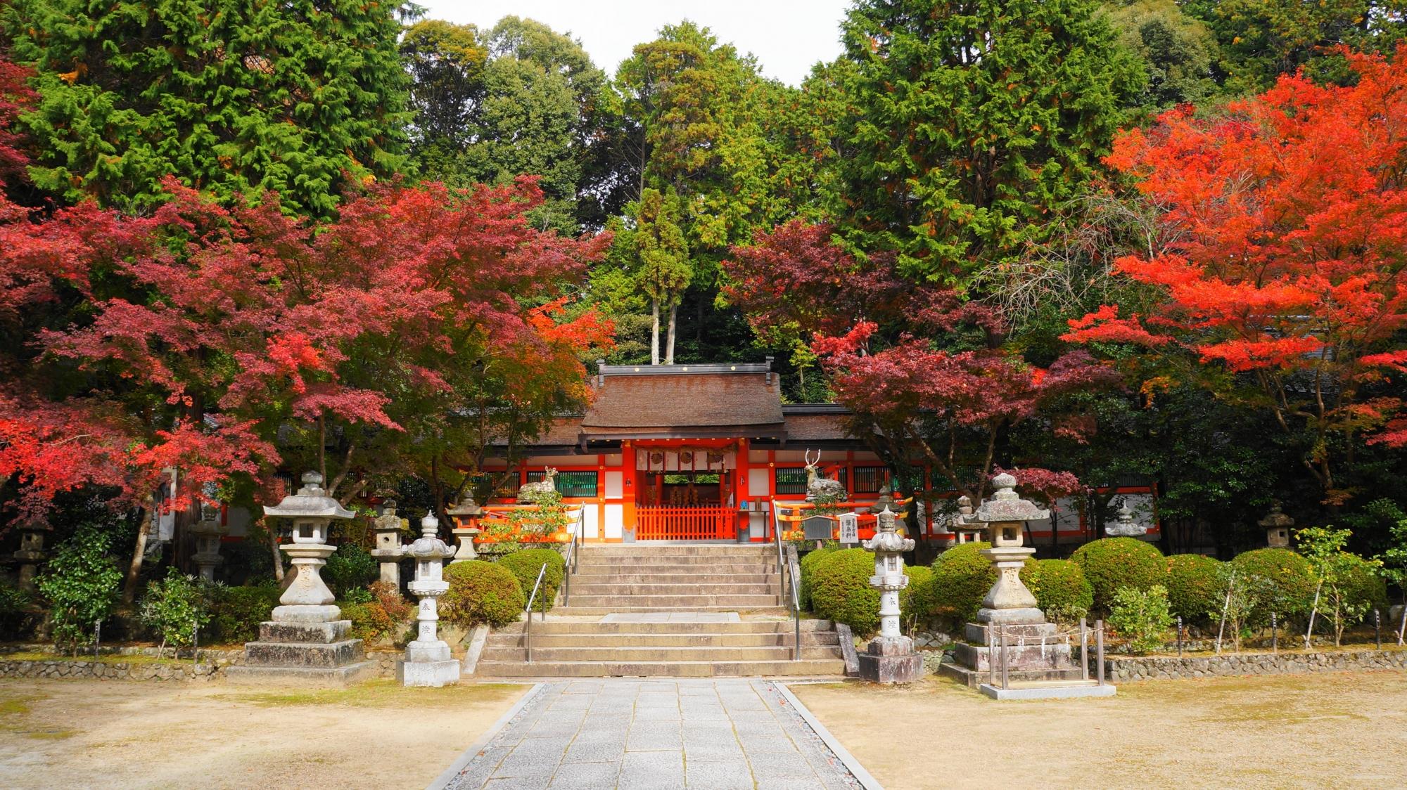 大原野神社の本殿の紅葉と背景の緑